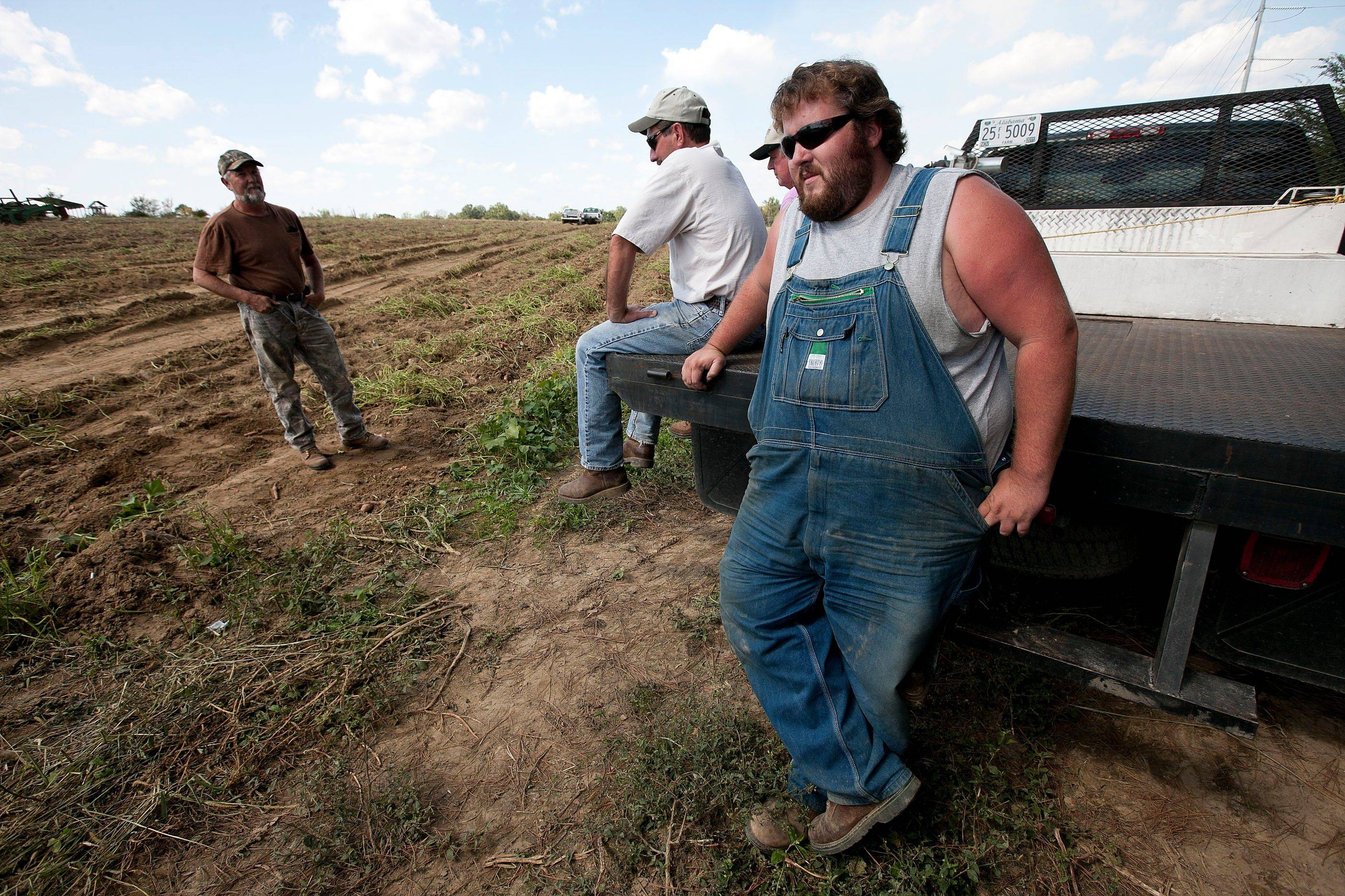 In September, sweet potato farmer Casey Smith, right, looks at a nearly empty sweet potato field that needs cultivating on his father's farm in Cullman, Ala. Normally, Smith hires some 25 laborers to help bring in his crop. Only five workers showed up on the day that Alabama's stringent immigration law took effect. A coalition of immigrant support groups has asked a federal appeals court to block enforcement of Alabama's new immigration law. The coalition said it filed the petition to the 11th U.S. Circuit Court of Appeals in Atlanta several hours after the federal government filed its challenge.