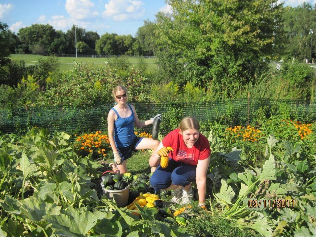 Nora Gawlik, back, and Mary Kate Dempsey collect another harvest from their park district garden.