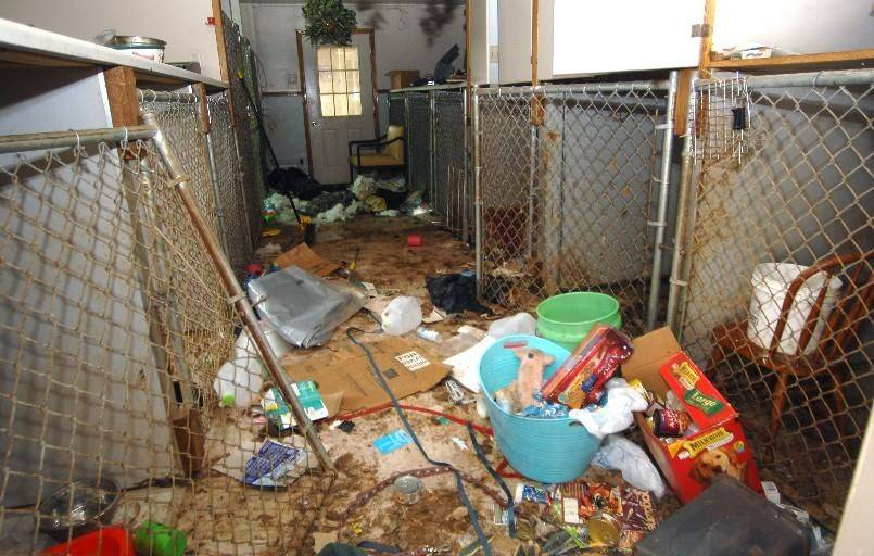 Authorities found filthy conditions inside the Muddy Paws facility on Rand Road in Deer Park.