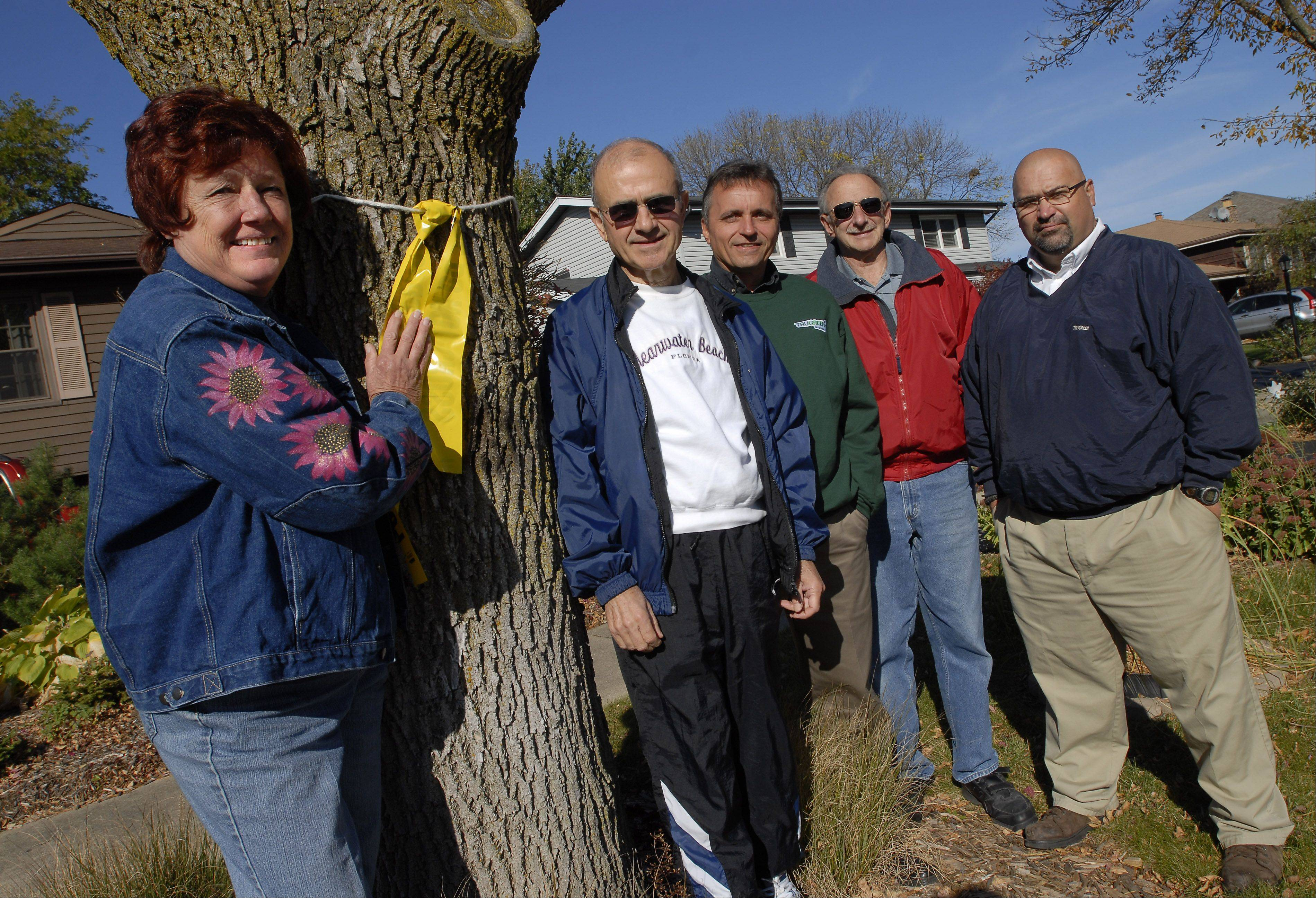 Carrie Brooks, left, of Mount Prospect, stands by the ash tree that has been in her front yard for the 15 years she has lived on Grace Drive. Brooks launched an effort on her block to protect ash trees against the emerald ash borer. Joining her are, from left, neighbor Frank Russo, TruGreen commercial sales manager Frank Skoria, her husband Dennis Brooks, and TruGreen field service manger and arborist Mark Cloud.