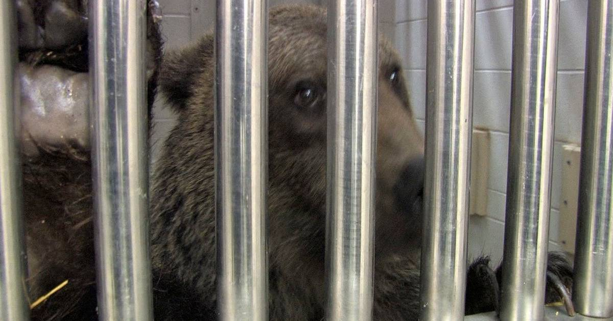 Ohio chaos driven by exotic animal trade
