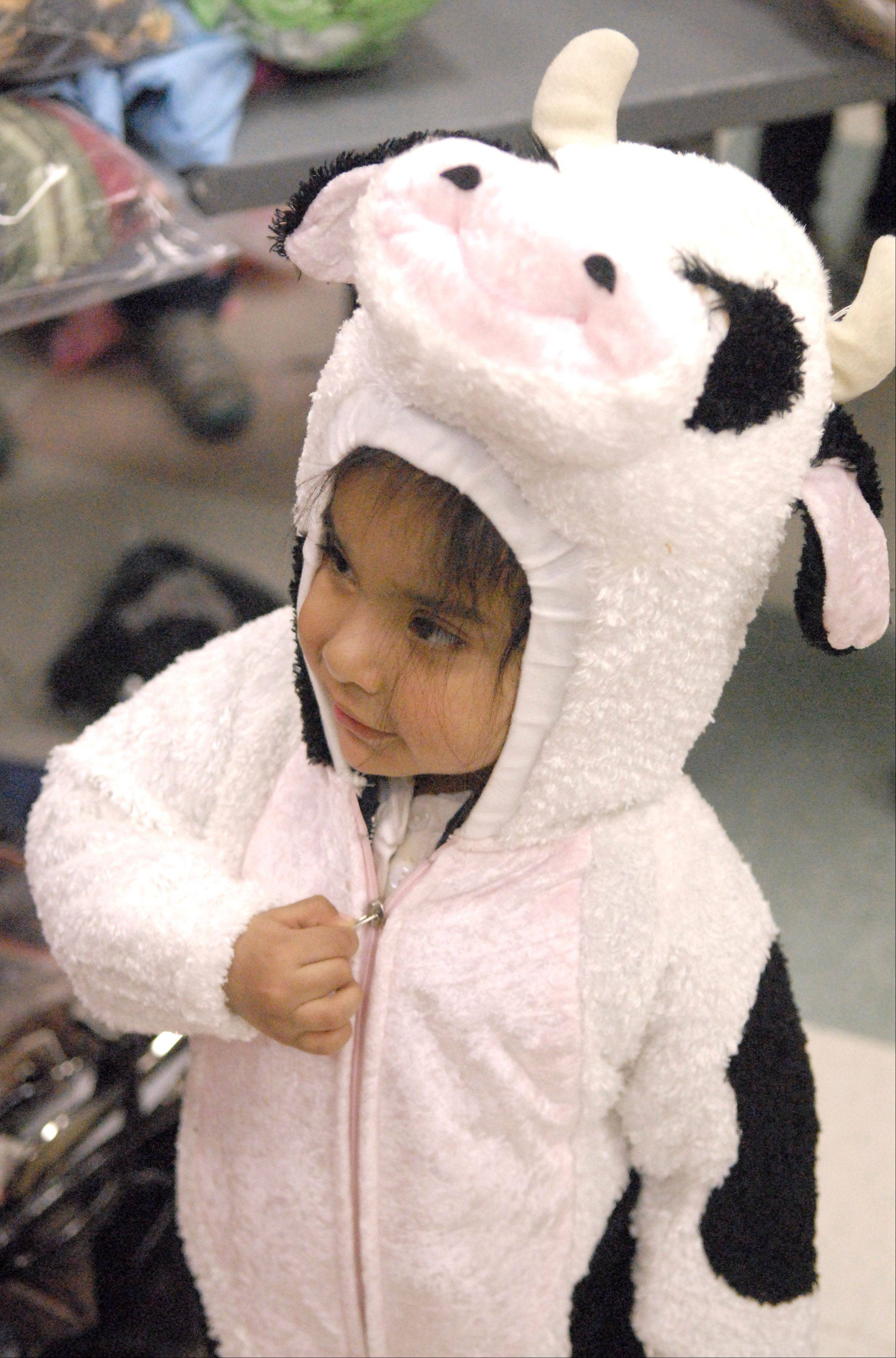 Thais (cq) Salinas, 3, of St. Charles tries on a cow costume for size at the Pottawatomie Community Center on Wednesday, October 19. Over 500 costumes were available to kids in need at the event. It is the fifth year for the event organized by St. Charles resident, Wendy Gruber.