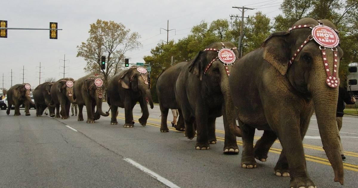 Circus elephants parade through Rosemont, Des Plaines