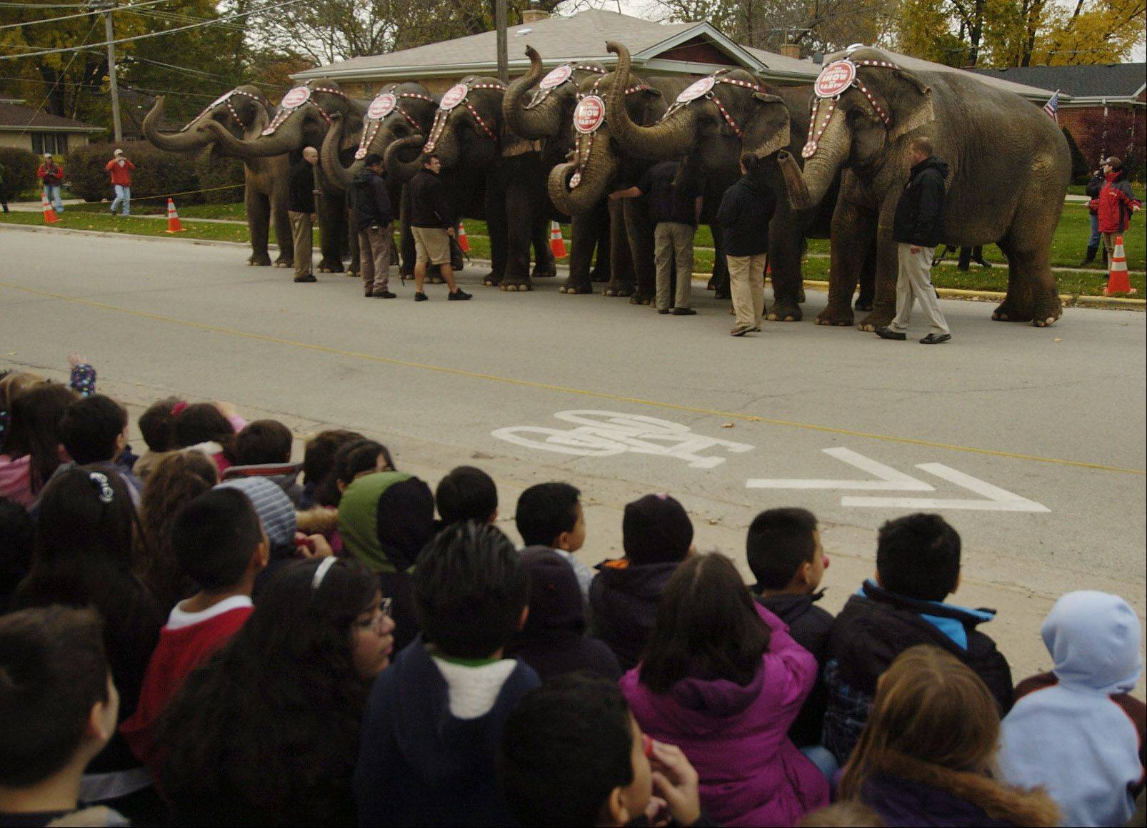 Ringling Bros. elephants arrive at Orchard Place Elementary School in Des Plaines.