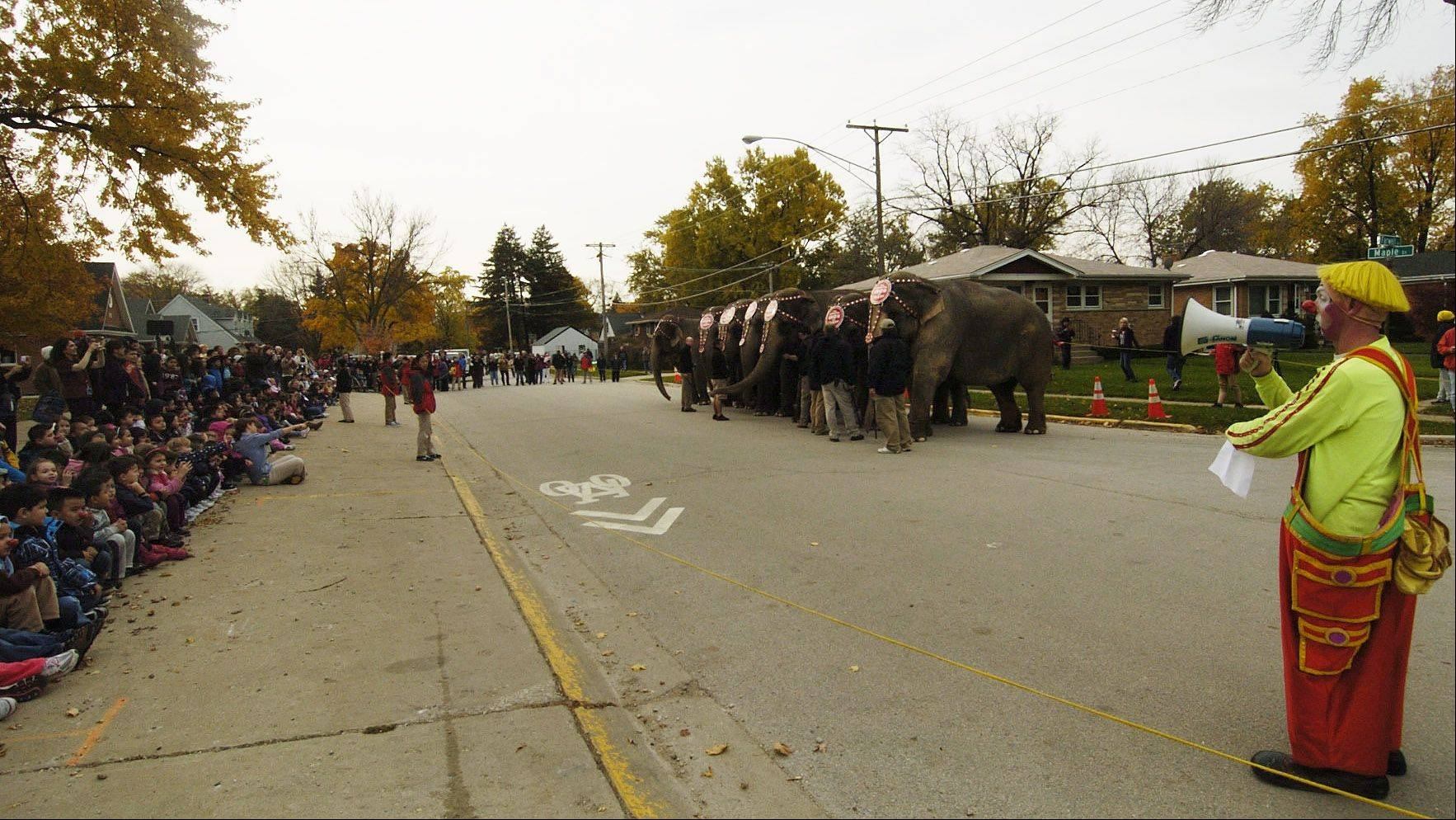 Orchard Place Elementary School students in Des Plaines welcome the Ringling Bros. elephants, who walked from Allstate Arena to their school.