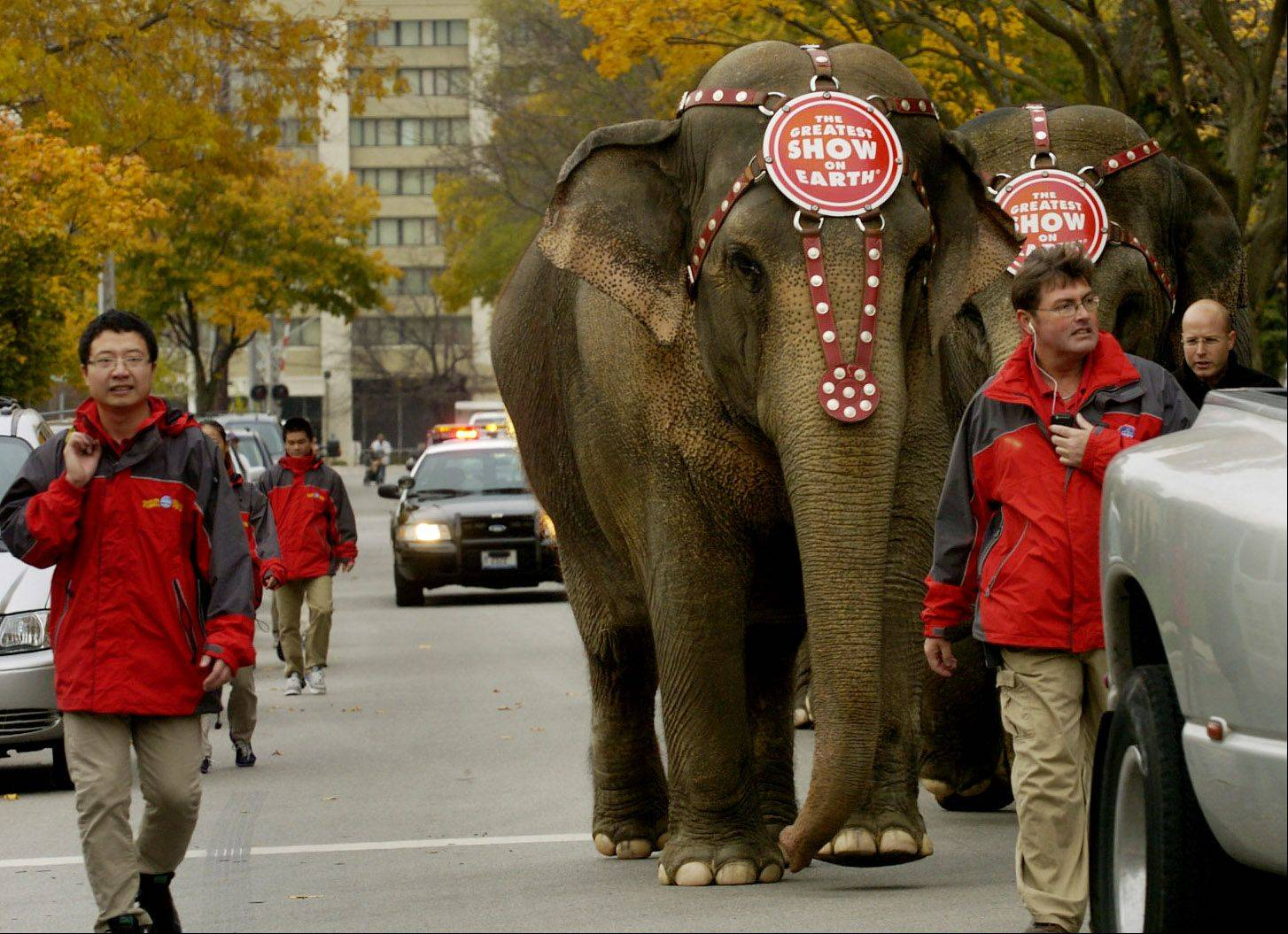 Ringling Bros. elephants walk down Pratt Street from Allstate Arena to Orchard Place Elementary School in Des Plaines.