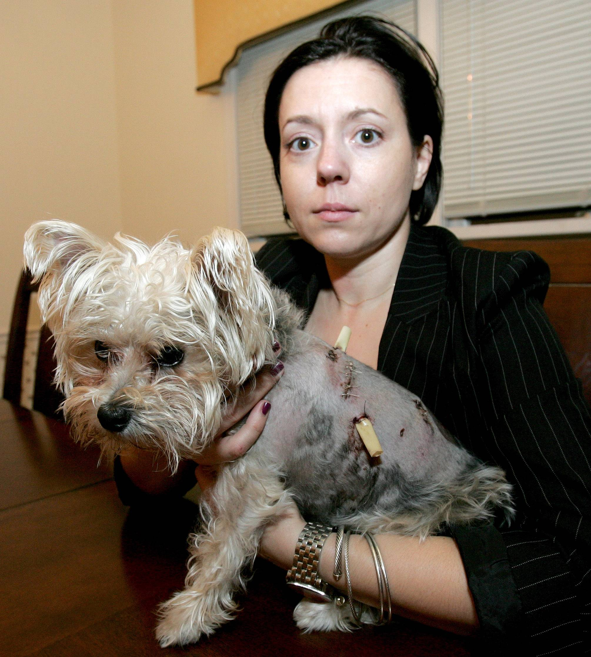 Karine Malec of Naperville holds her 2-year-old dog, Jasper. Jasper was attacked by two bigger dogs Friday at the Springbrook Prairie Forest Preserve.
