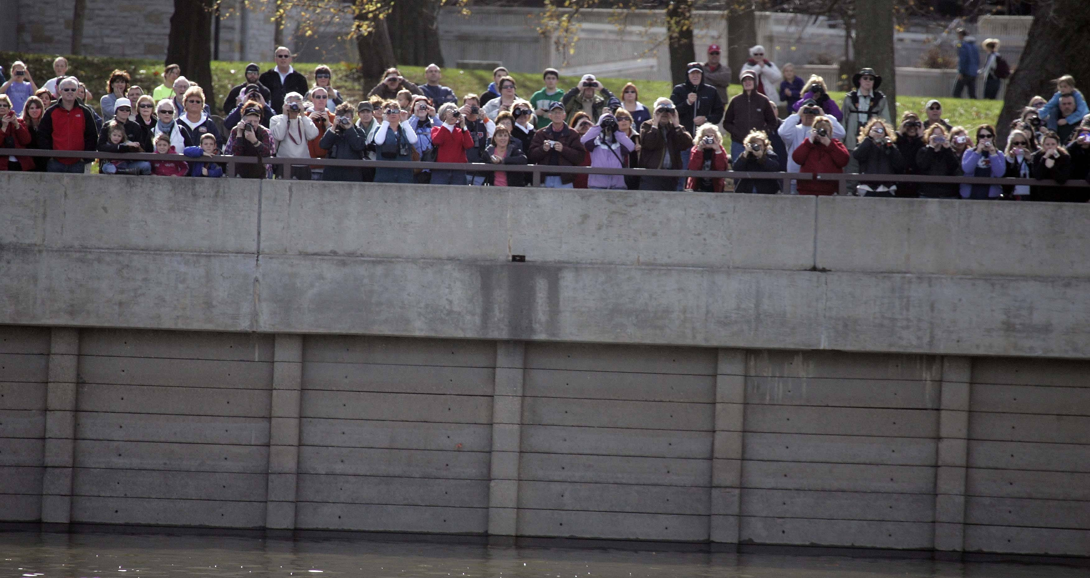 Hundreds of people get a view of the two eagles at Starved Rock State Park Saturday.