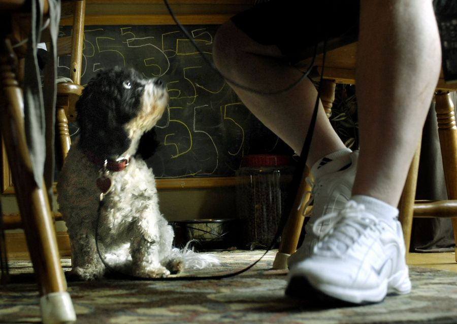 Dan Sauer's service dog, Chloe, stays at his feet at all times and interacts with him in his Hampshire home.