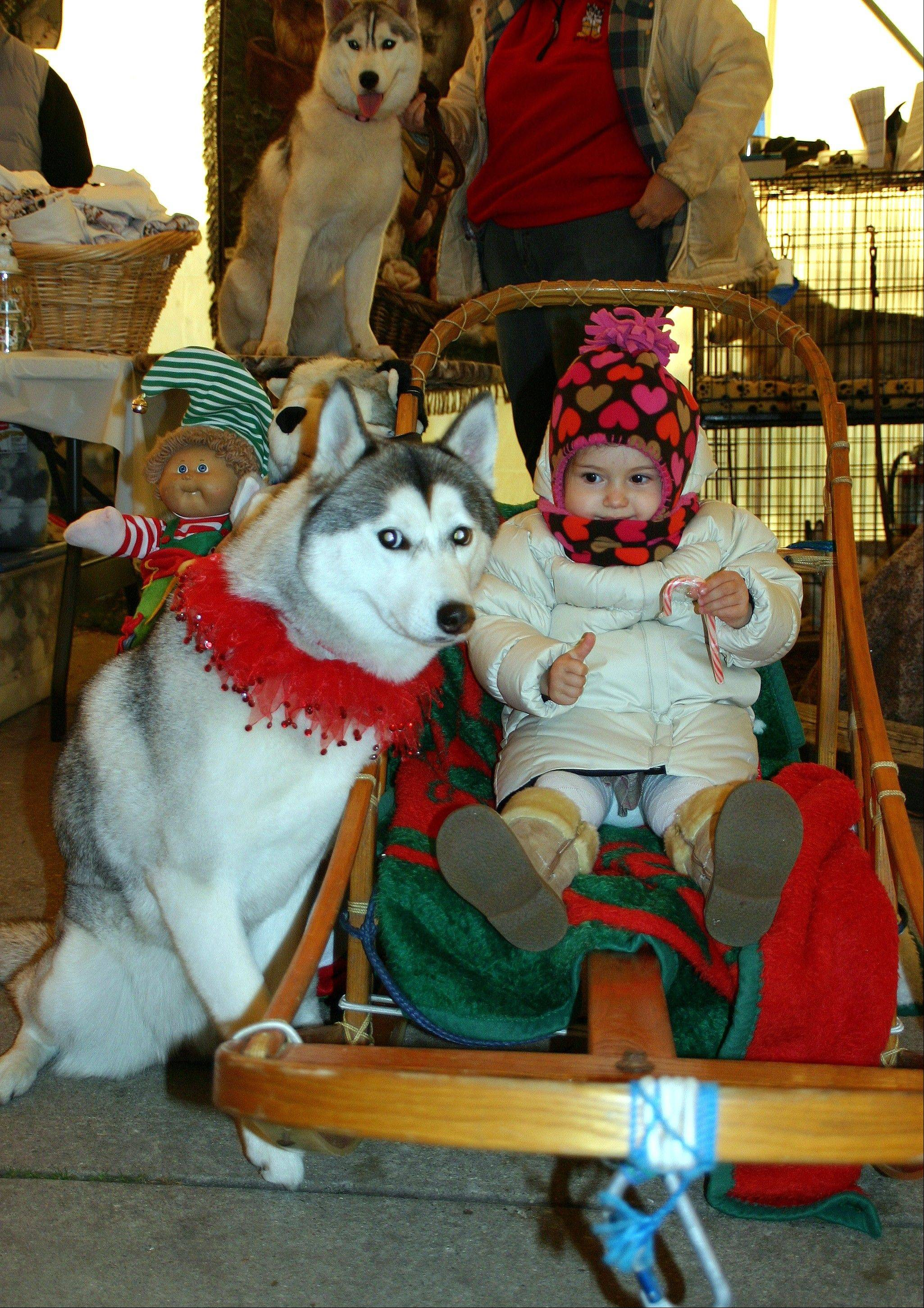The Siberian Huskies will be on hand for photo opportunities and a talk on the history of the Iditarod.