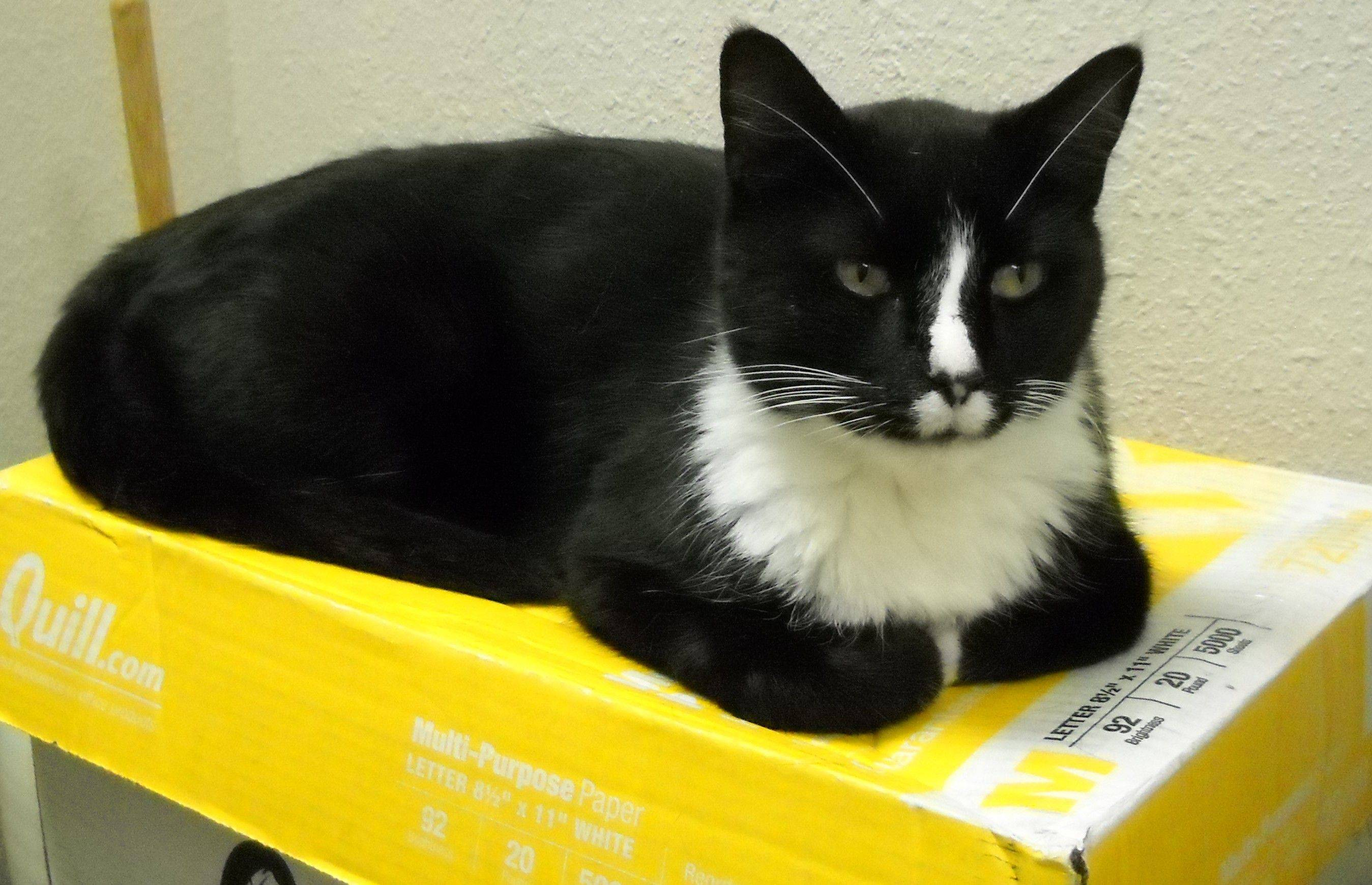 Comiskey gets back into his routine of camping out on copier paper boxes this week at the Brandon law office.