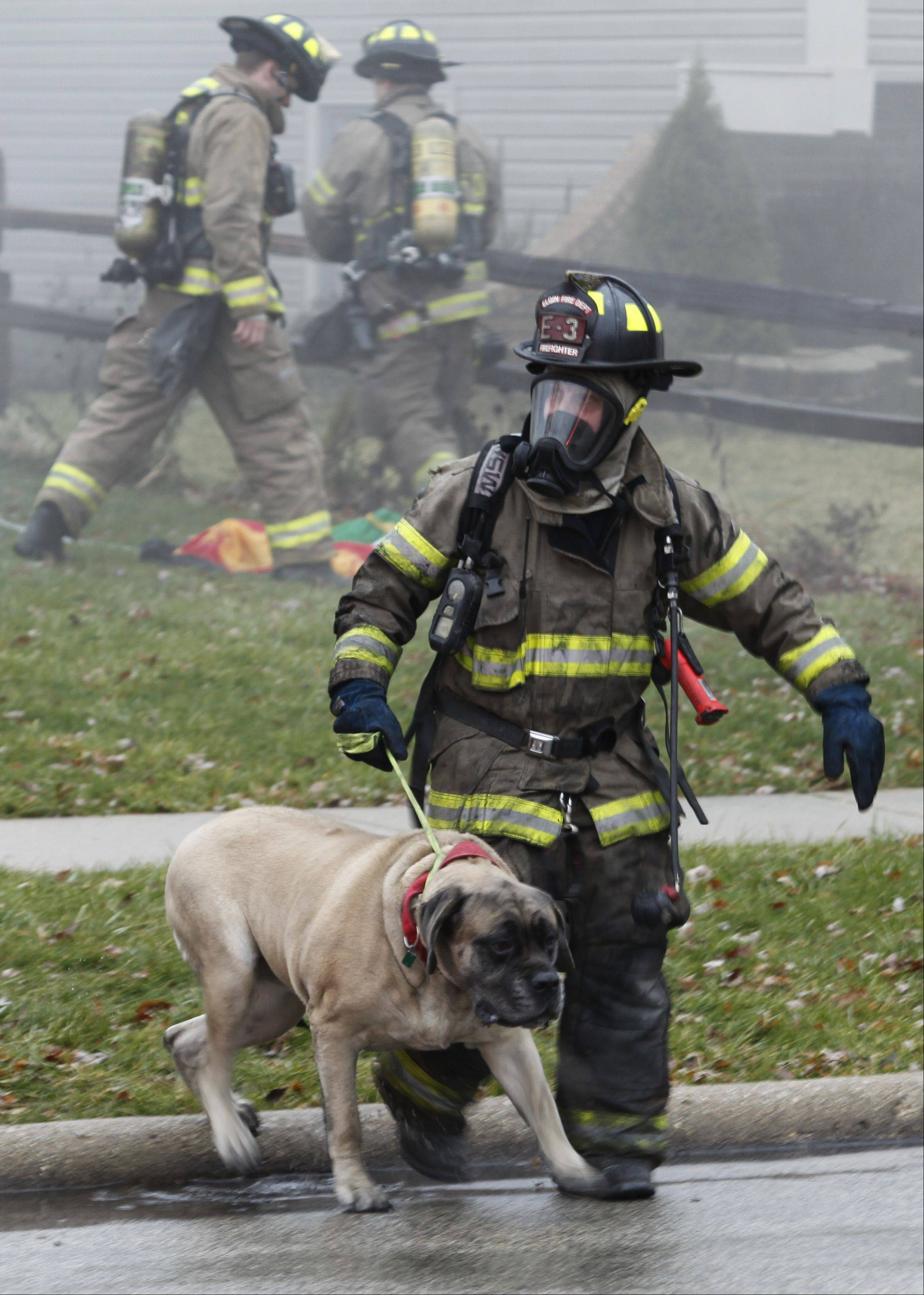 A firefighter brings out one of the family dogs after rescuing it from the burning home on Sheffield Drive in Elgin Wednesday afternoon.