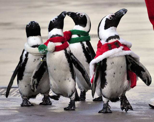 Employees of Spain's Laboratorios Farmaceuticos Rovi SA had to party without the penguins this year. The Antarctic animals sporting Rovi's scales logo welcomed workers to past Christmas celebrations at the Faunia nature theme park in Madrid. The drugmaker cut this year's budget by almost 60 percent to about 25,000 euros ($32,600), Chief Financial Officer Javier Lopez-Belmonte said. Christmas parties have gone the way of Spain's AAA credit rating.