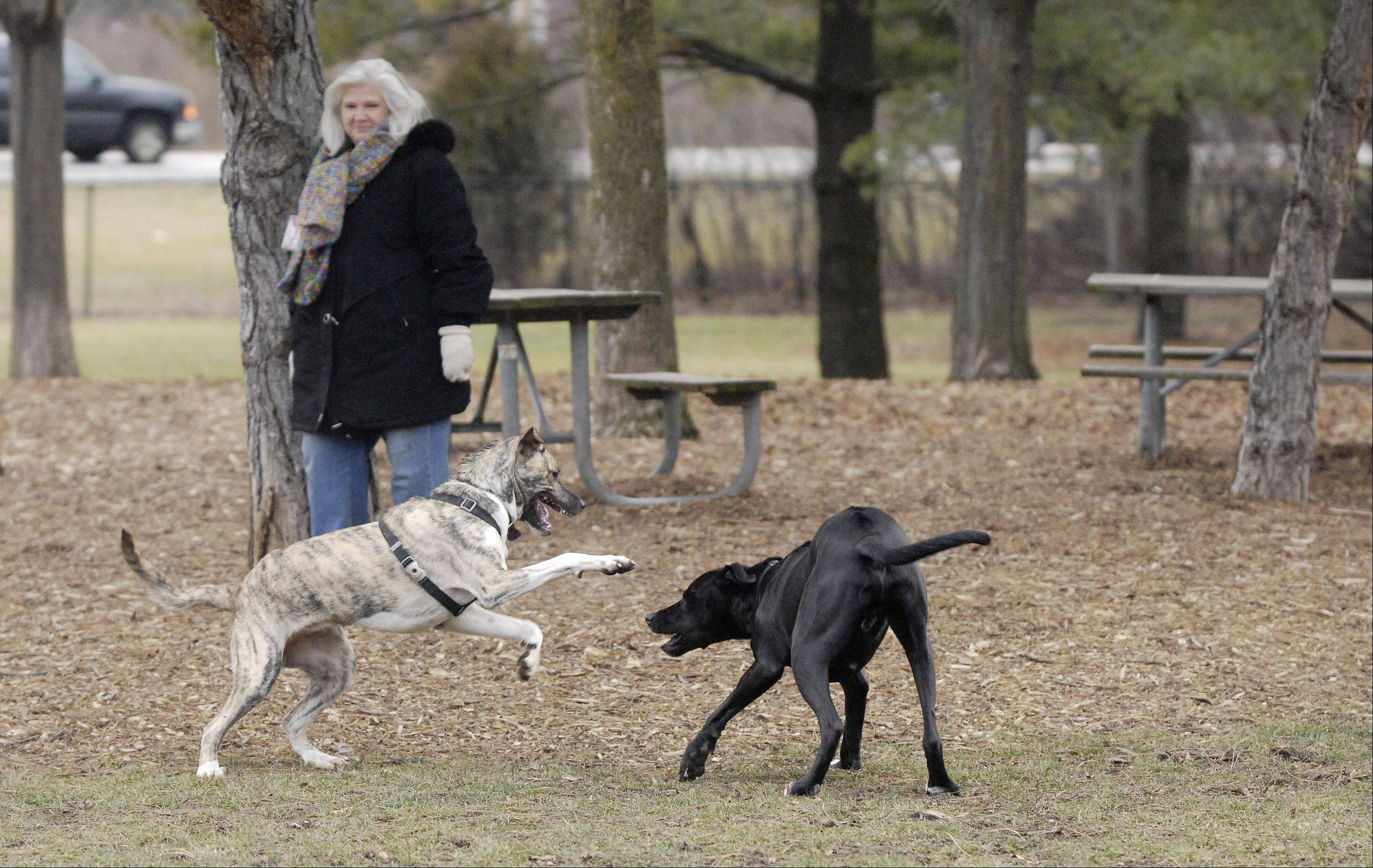 Janit Chumney watches as Lollee and Reese play Wednesday at Glen Ellyn Park District's dog park.