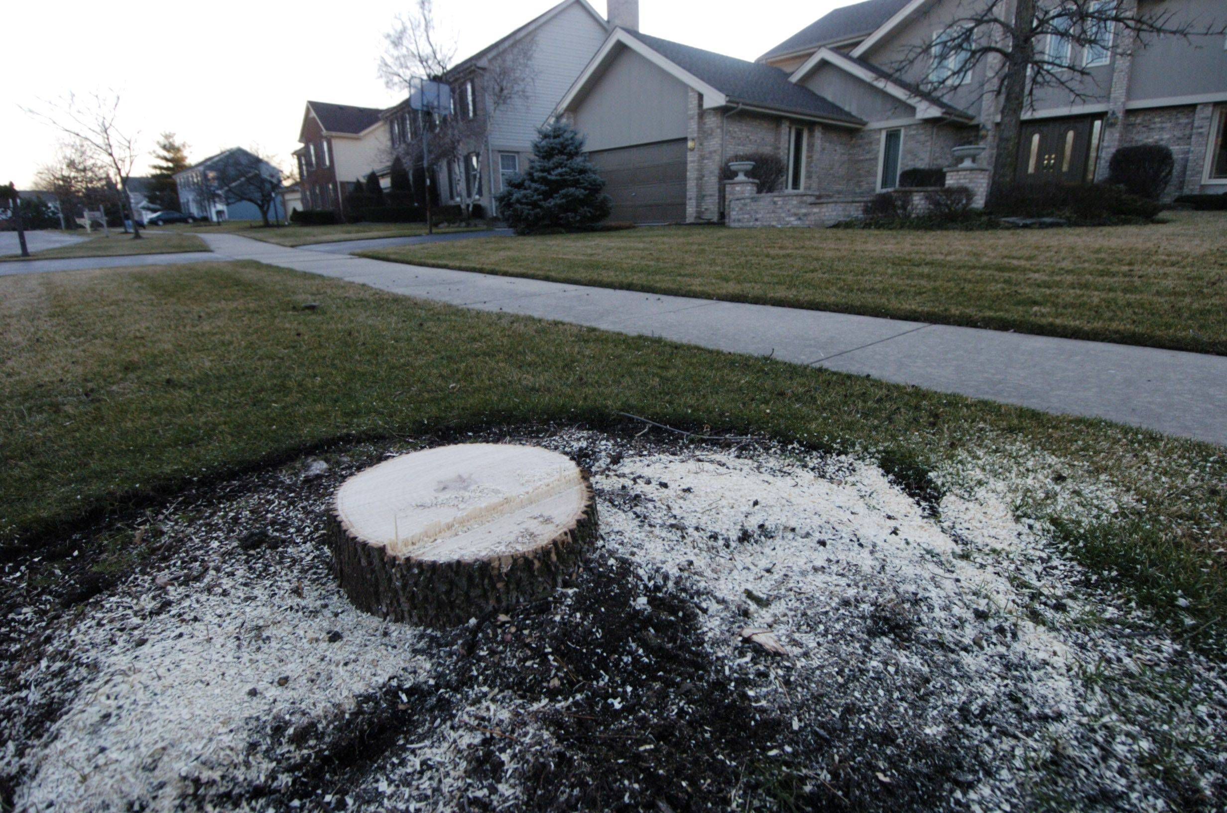 Des Plaines removes trees afflicted by emerald ash borer