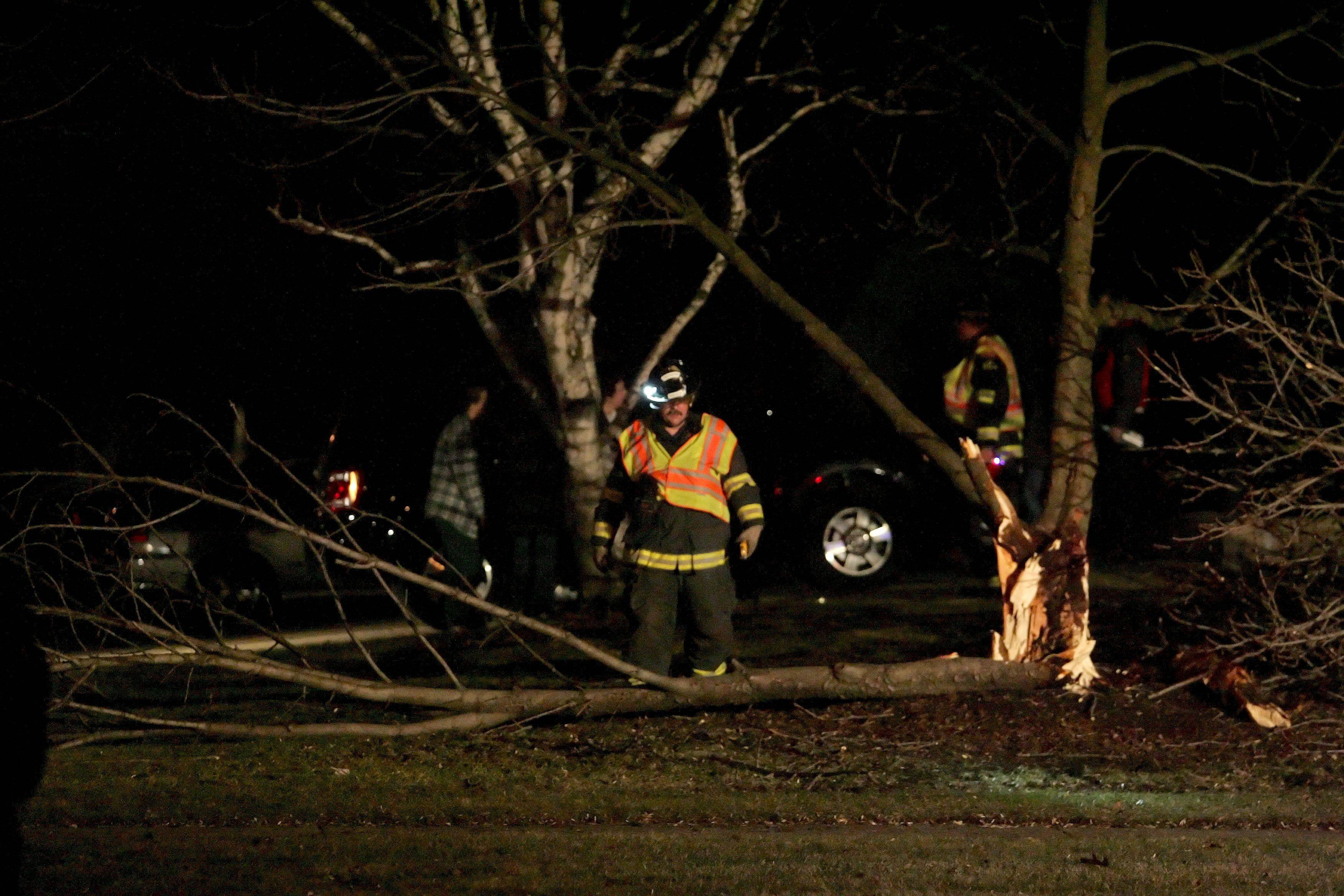 A tree was damaged after a one-car accident at the intersection of Naperville Road and Farnham Lane in Wheaton.