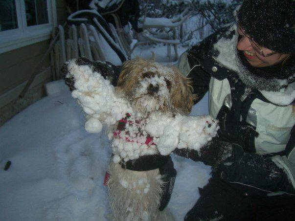 My dog loves snow!