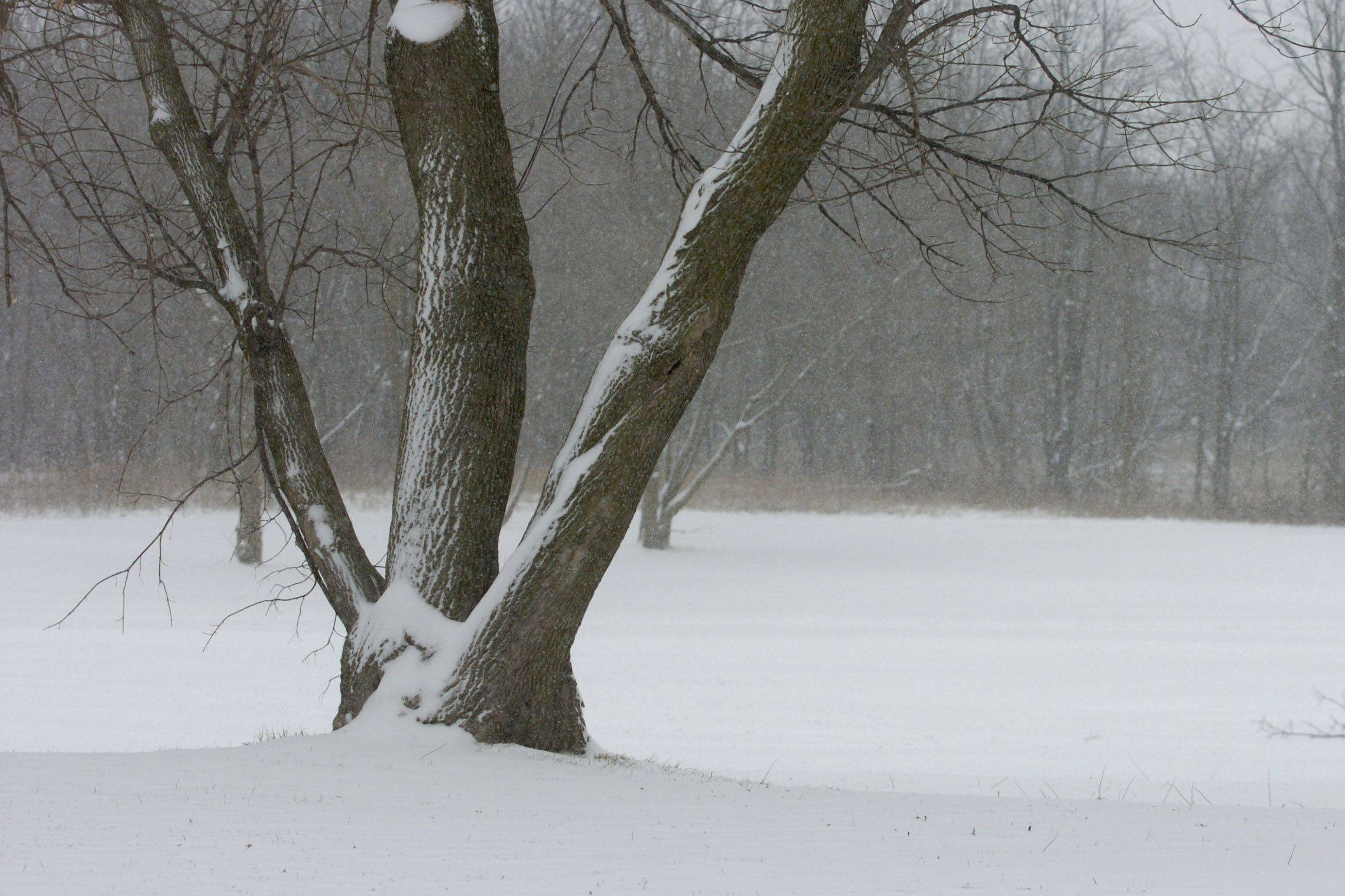 Snow blankets Bode East Forest Preserve, a day after 50 degree temperatures.