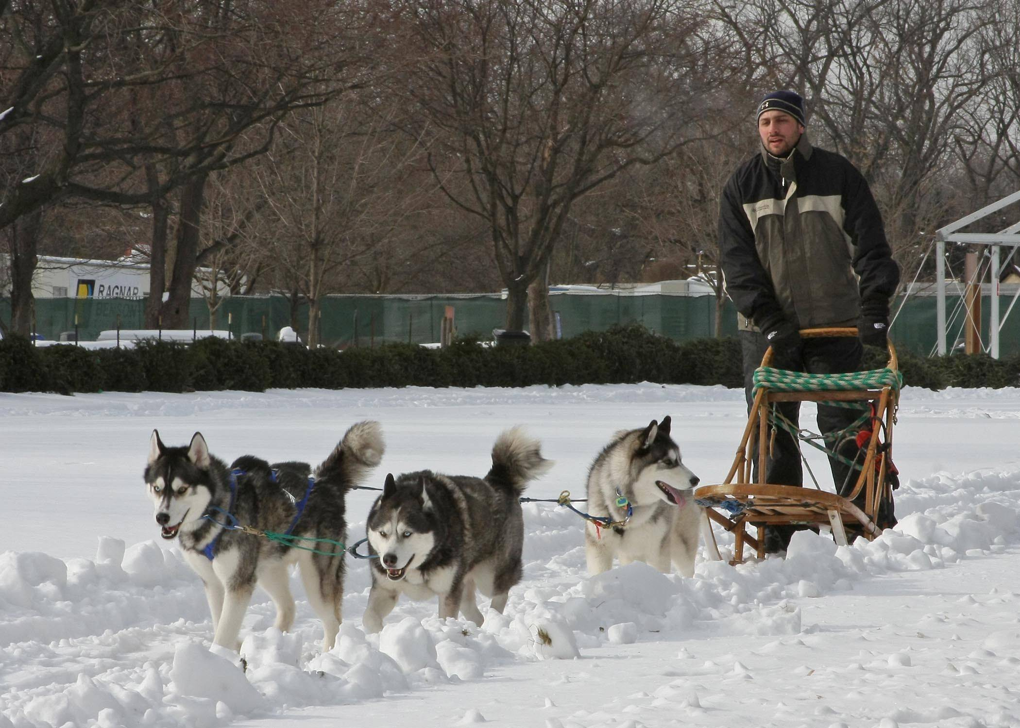 "The Green Valley Dog Drivers provide a dog-sledding demonstration at Brookfield Zoo's ""FREEze Day"" on Sunday, Feb. 19."