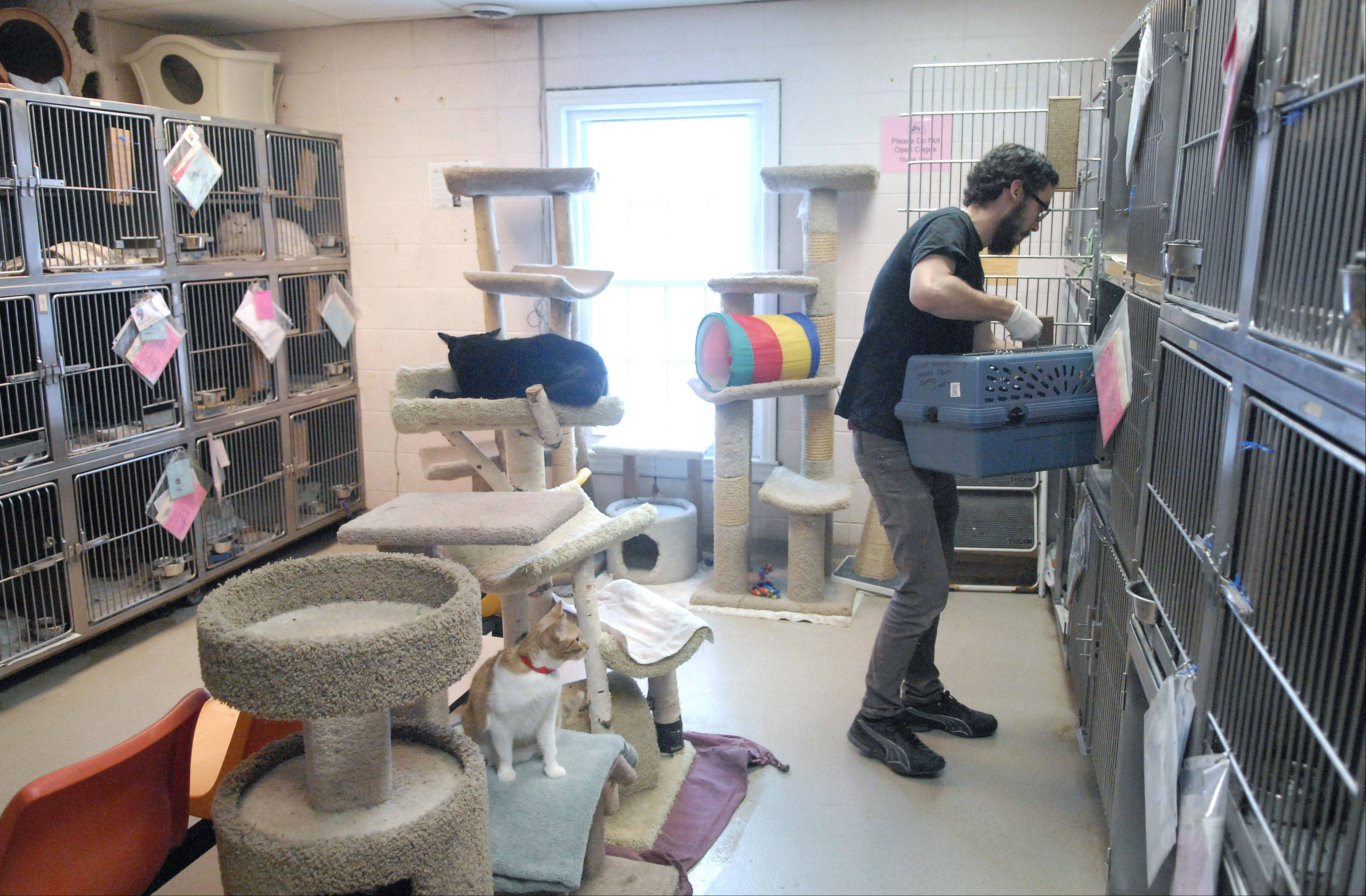 "Staff employee Josh Henderson of South Elgin returns a cat back to its cage in the area affectionately referred to as the ""Little Country"" cat room."