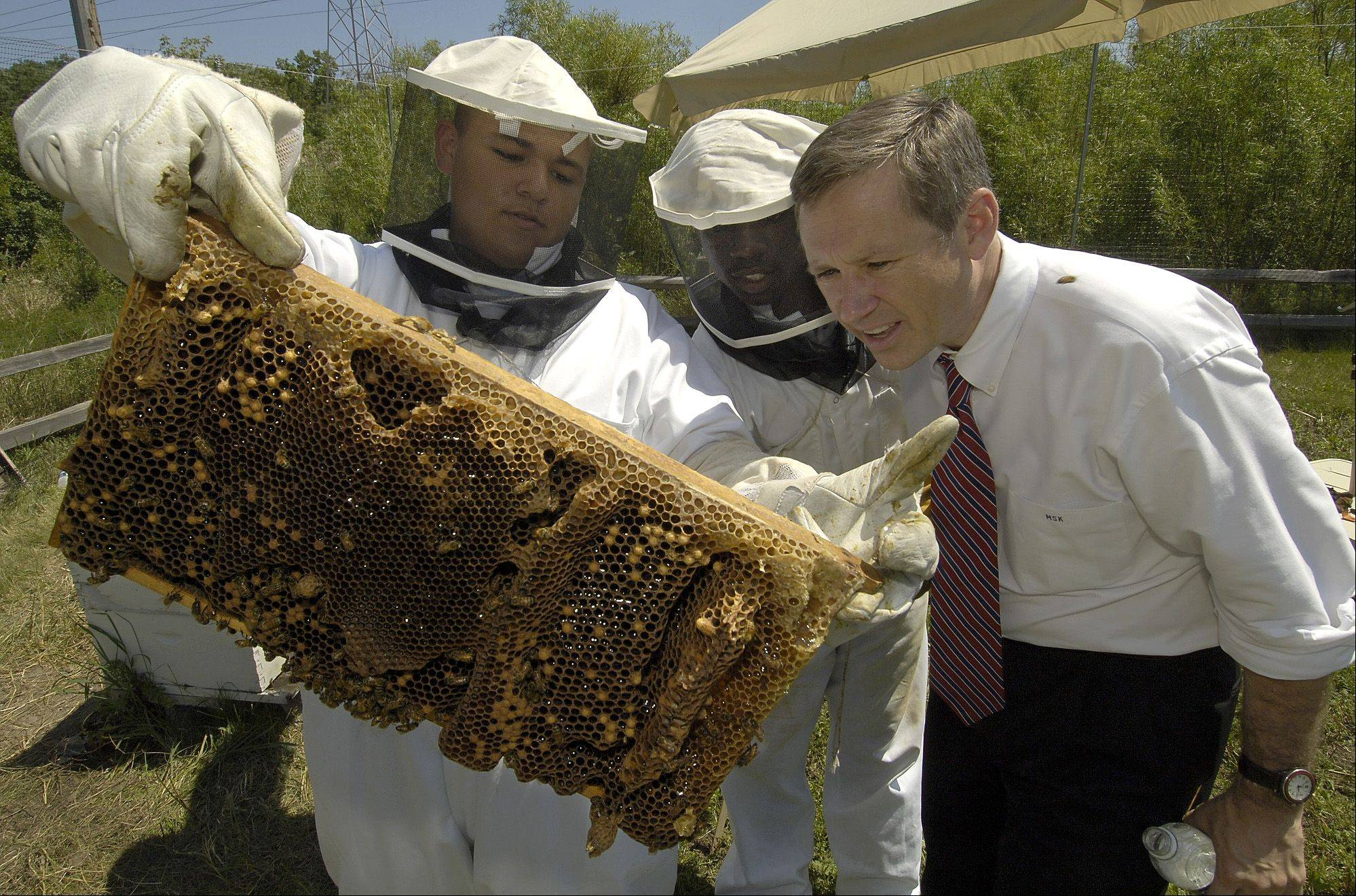 Beekeepers Ivan Acosta, left, and Khalil Harris show a panel of bees from their beehive to US Rep. Mark Kirk, who was touring the open house of the Green Youth Farm in the Greenbelt Forest Preserve in North Chicago.