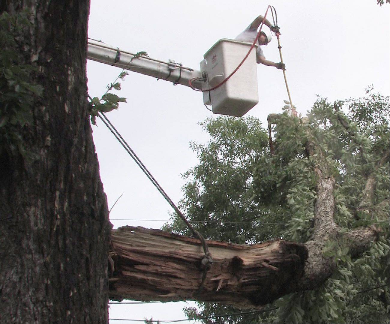 A contractor hired by Mount Prospect cuts branches from a damaged tree along Council Trail after a storm in August 2007. Village officials say the cost of such work could increase under a stricter application of the state's prevailing wage law.