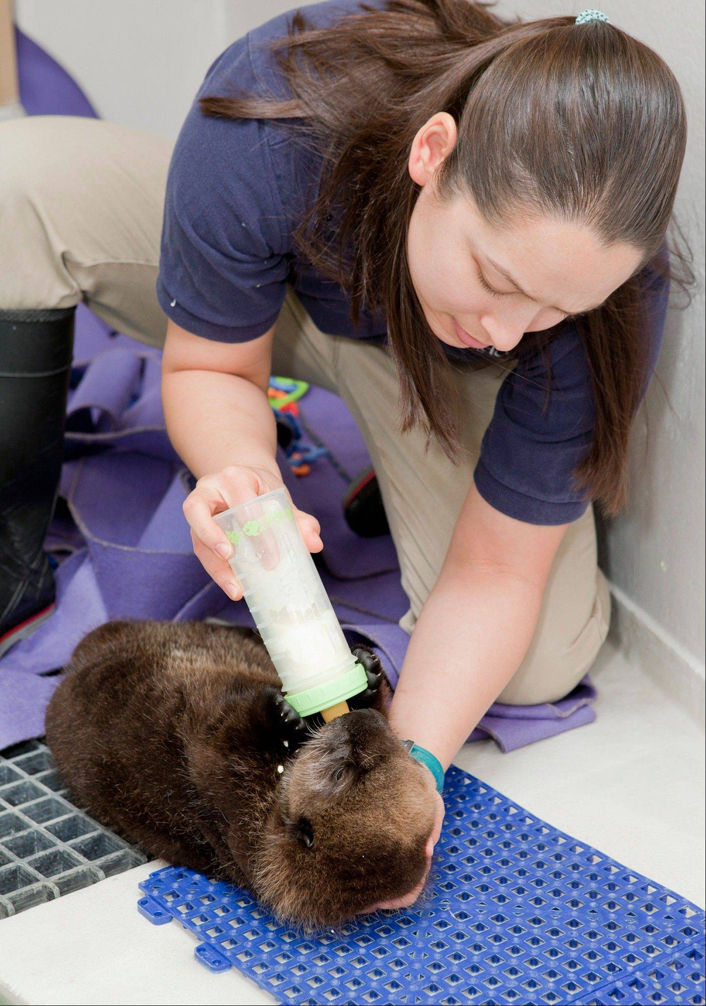 Trainer Lana Vanagasem feeds an orphaned southern sea otter pup at the aquarium on Jan. 5.