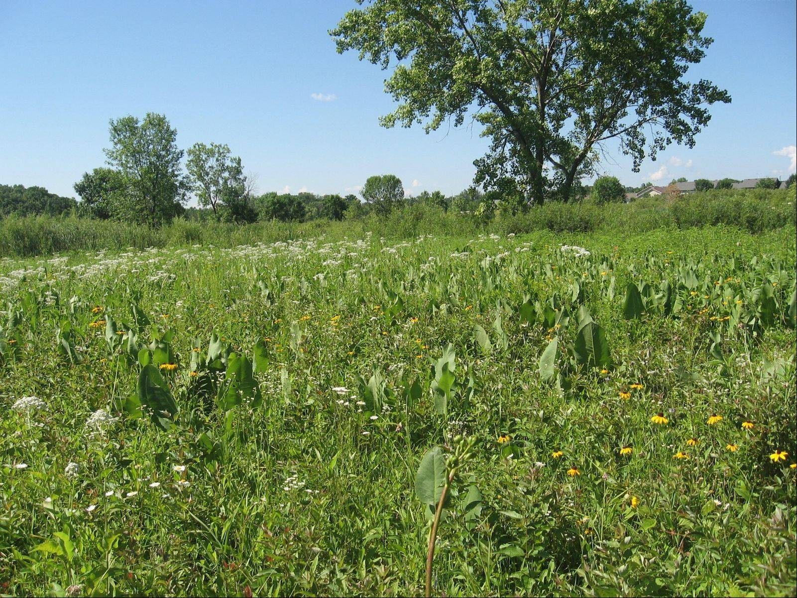 This property in Waukegan, which contains a rare prairie landscape, was approved this week by state authorities as an Illinois Nature Preserve.