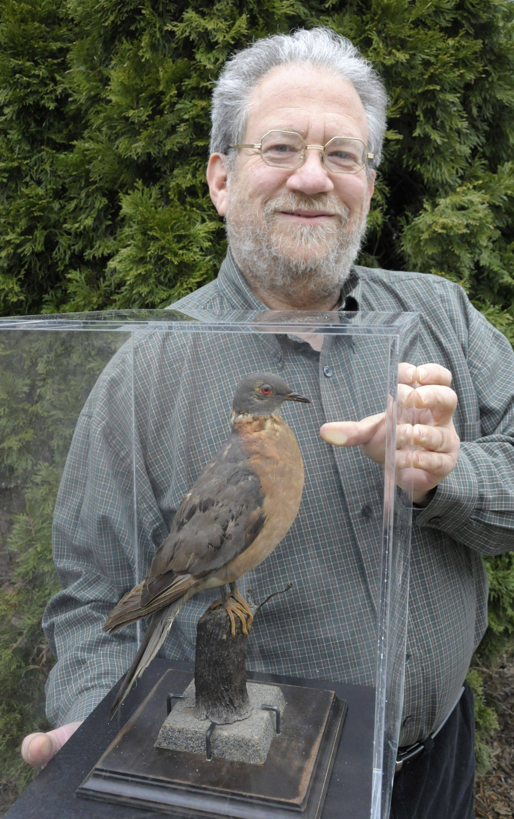Joel Greenberg displays Heinrich, a stuffed passenger pigeon. The Westmont author is one of the lead organizers of Project Passenger Pigeon, a national educational effort involving the long extinct bird.