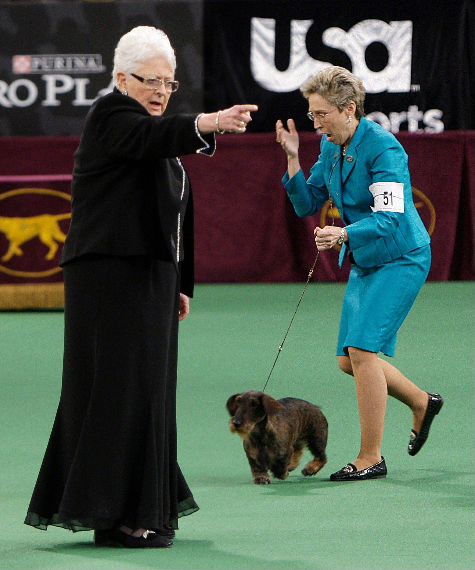 Handler Cheri Koppenhaver, right, reacts after judge Patricia Laurans, left, declared Cinders, a wirehaired dachshund, the winner of the hound group .