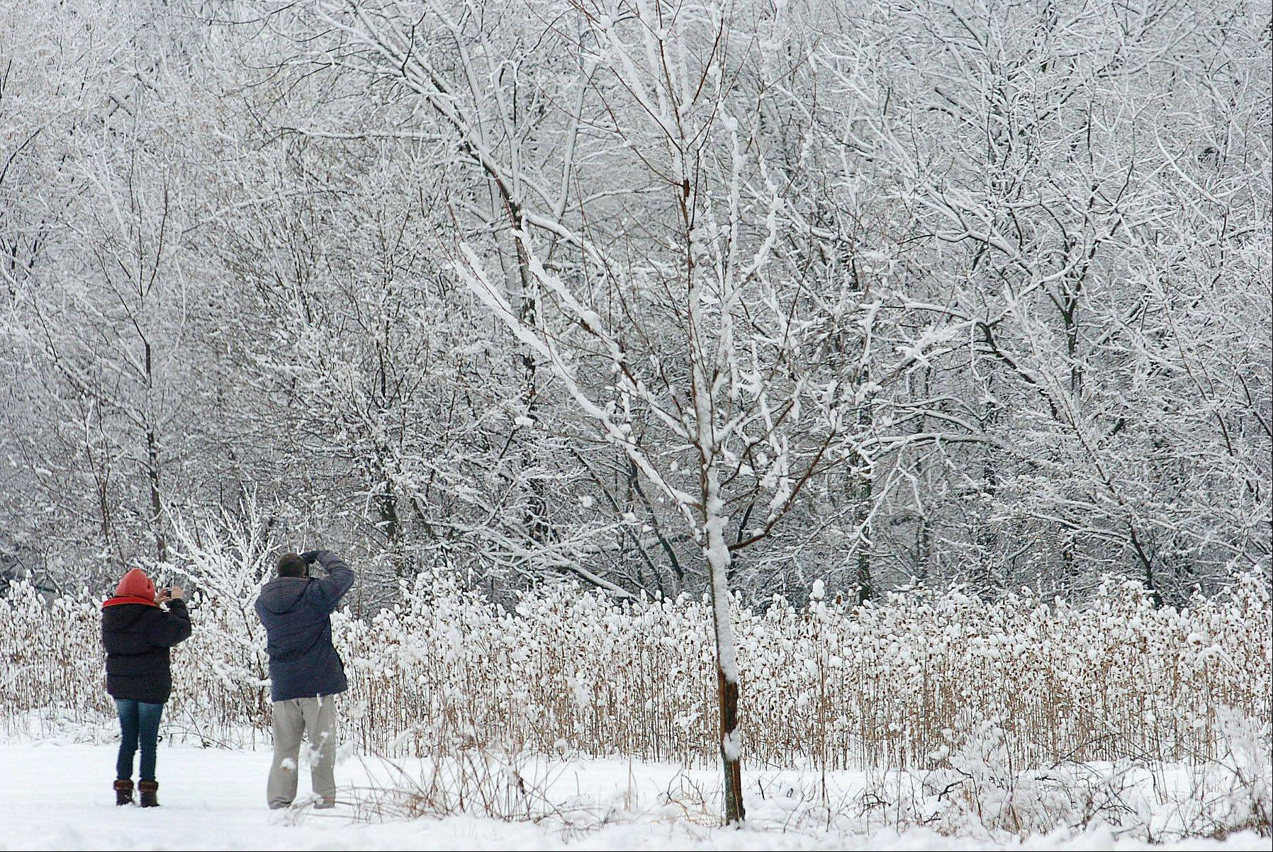 A couple stops to photograph some trees Friday in Busse Woods, as amateur photographers were out in droves photographing the picturesque snow formations after the overnight snowfall.