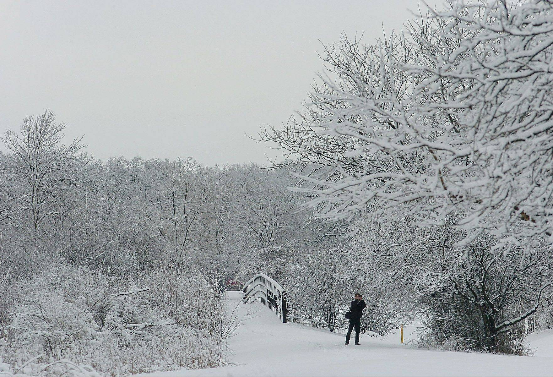Kevin Brandner of Streamwood, stops to photograph some trees along the bike path in Busse Forest West, as amateur photographers were out in droves Friday photographing the picturesque snow formations after the overnight snowfall.