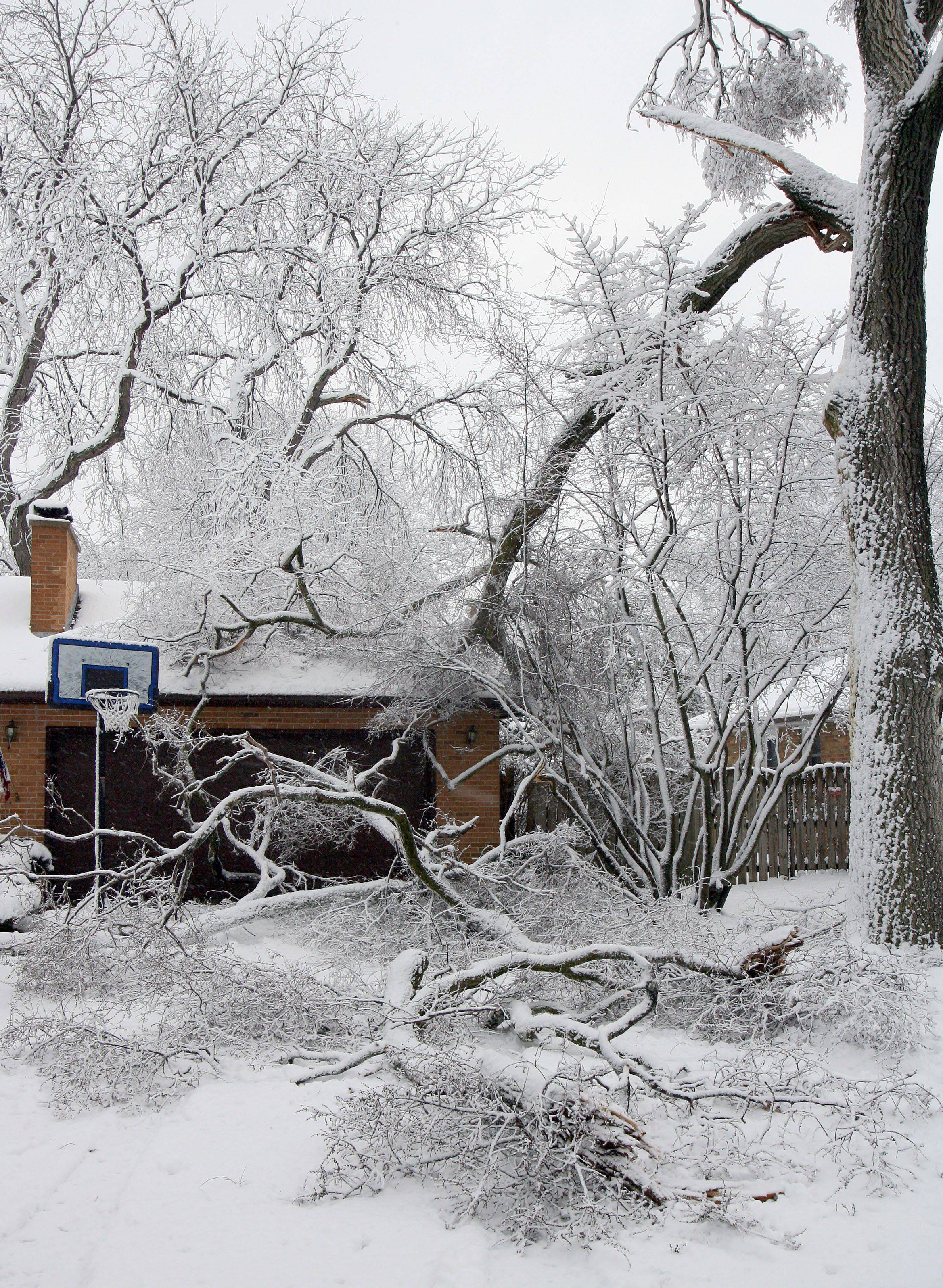 Tree branches sit in the driveway of this house in Libertyville after a snowstorm dumped heavy, wet snow on the area Friday.