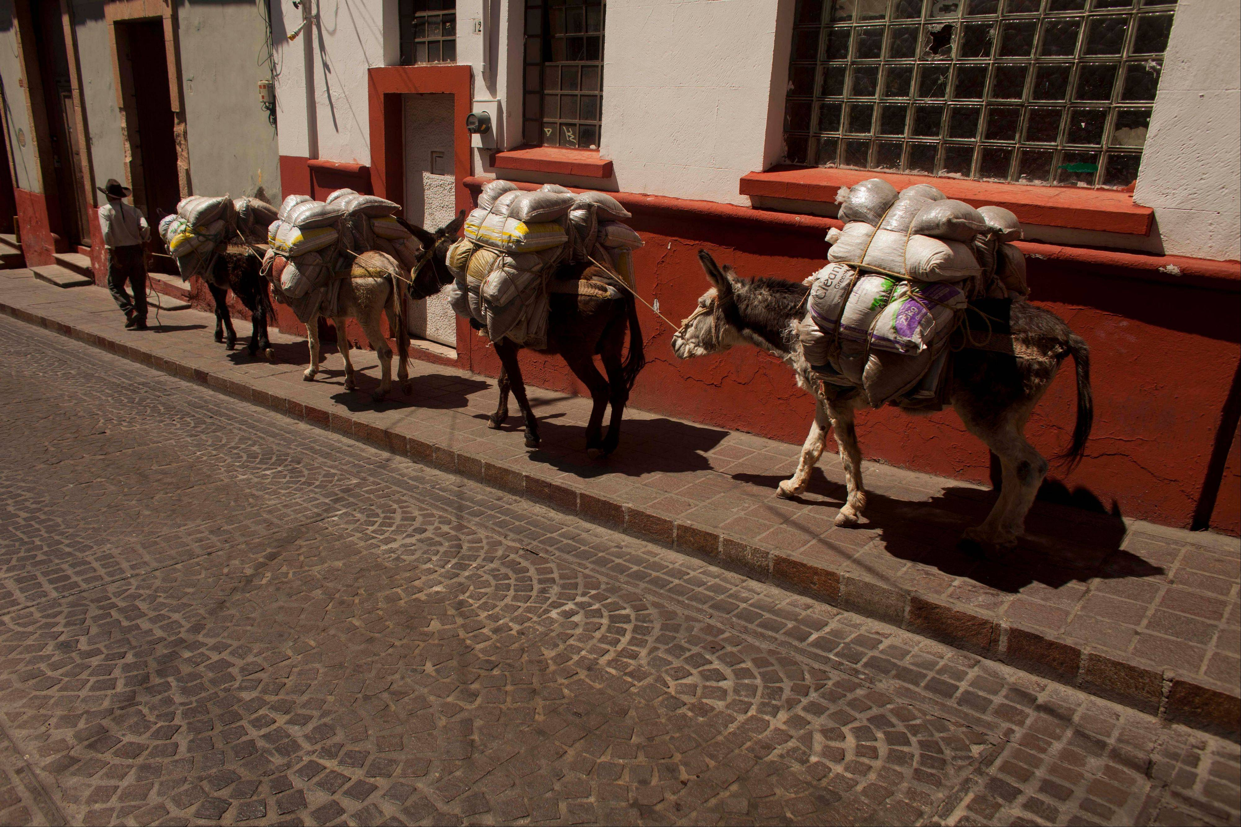 A man leads a group of mules through Guanajuato, Mexico.