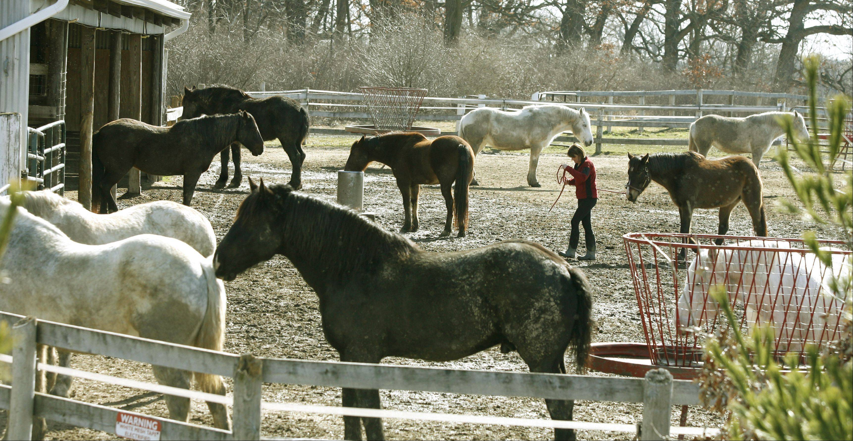 DuPage forest investigates complaints of horse neglect at Danada