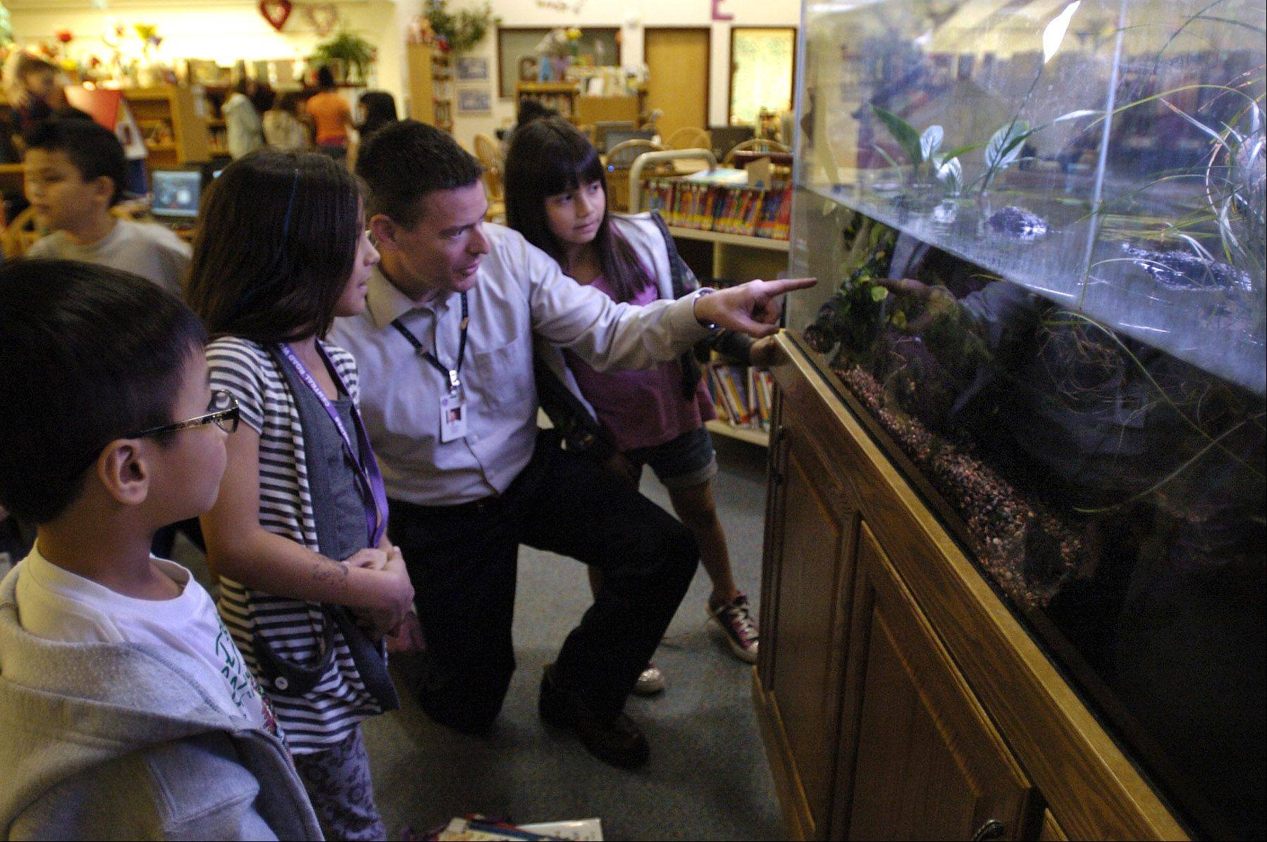 Golden Apple finalist second-grade teacher Rob Taylor works at Central Road School in Rolling Meadows. He is with his students from left, Hao Duong, Olivia Zacarias and Emily Zendejas, looking at a self-sustaining mini ecosystem he designed that is on display in the school library.