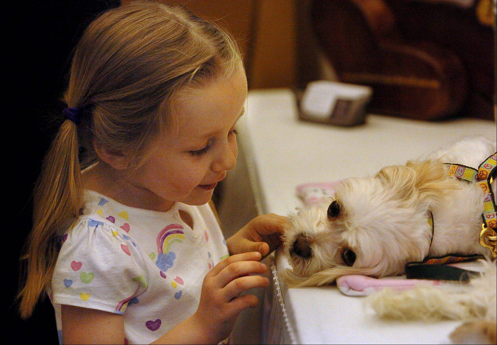 4-year-old Delanie Wiezorek of Des Plaines, pets Tessa, a Maltese, at the Chicagoland Family Pet Expo at Arlington Park.