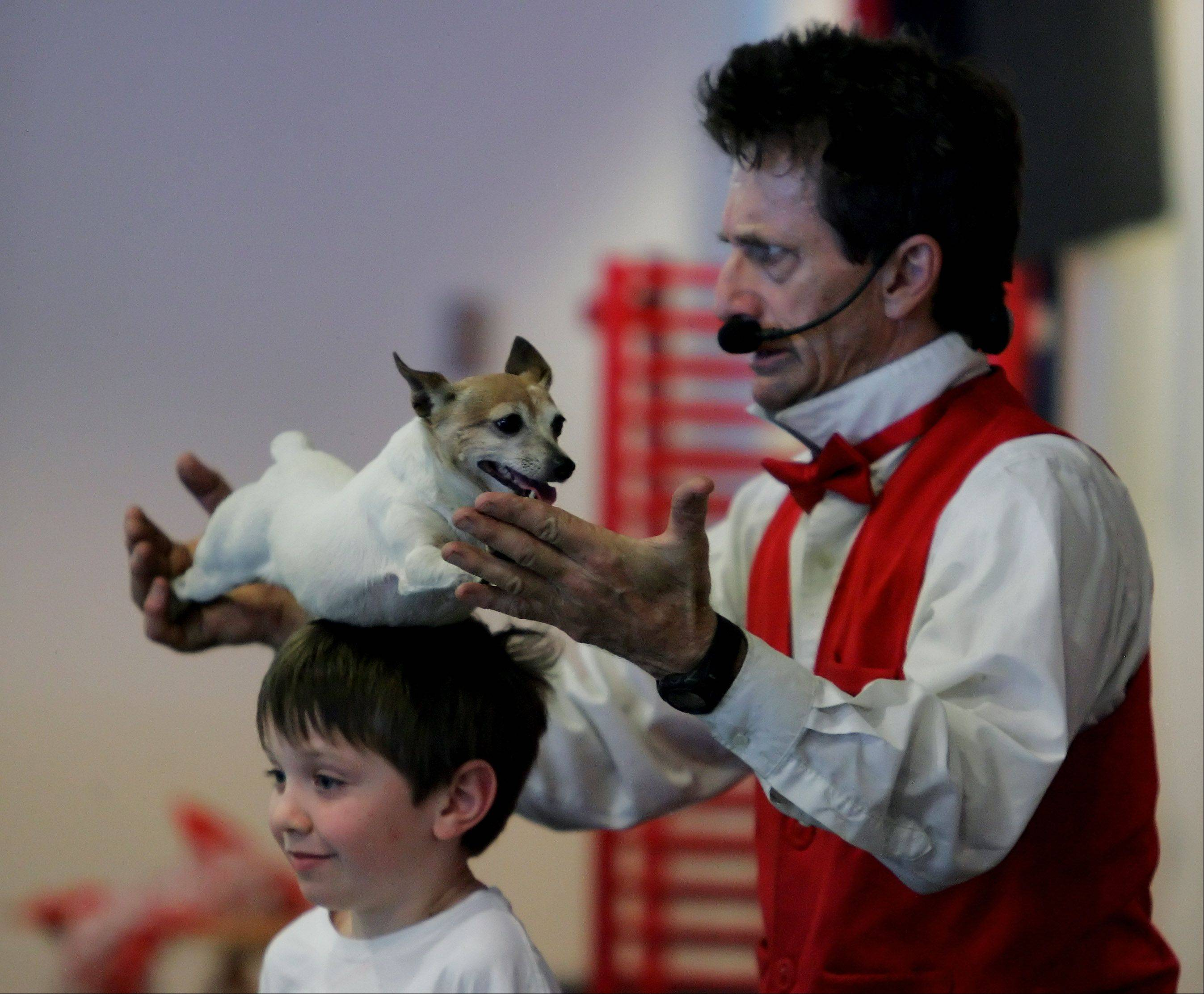 Johnny Peers balances a dog on the head of eight-year-old Ted Doyle, of Lombard, during the Johnny Peers & The Muttville Comix on the final day of the Chicagoland Family Pet Expo Sunday at Arlington Park Racecourse in Arlington Heights.