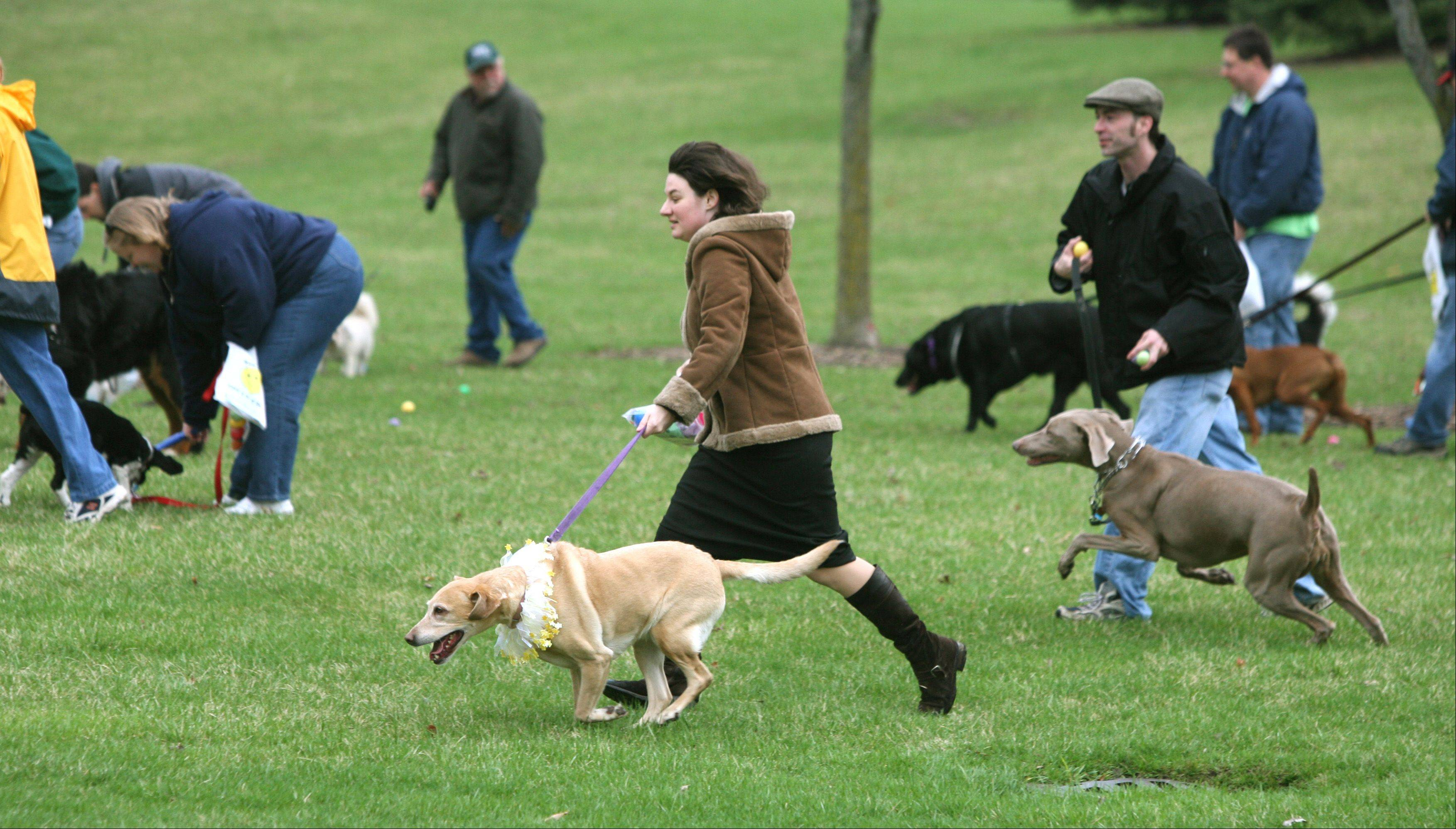 Even dogs will have a chance to hunt for eggs at several area egg hunts this season.
