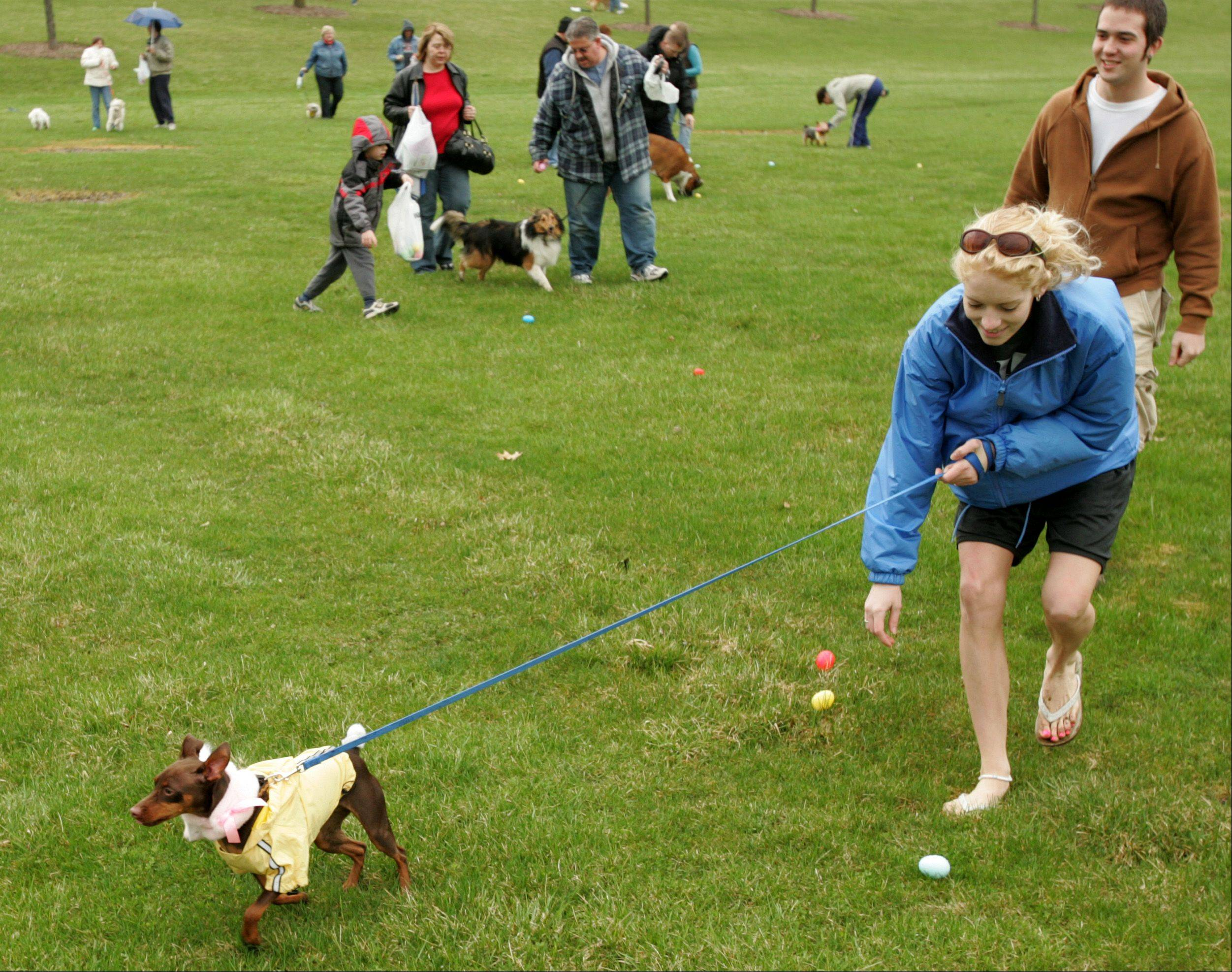 Some egg hunts on this spring's schedule even set aside time for pooches to sniff out their favorite treats.
