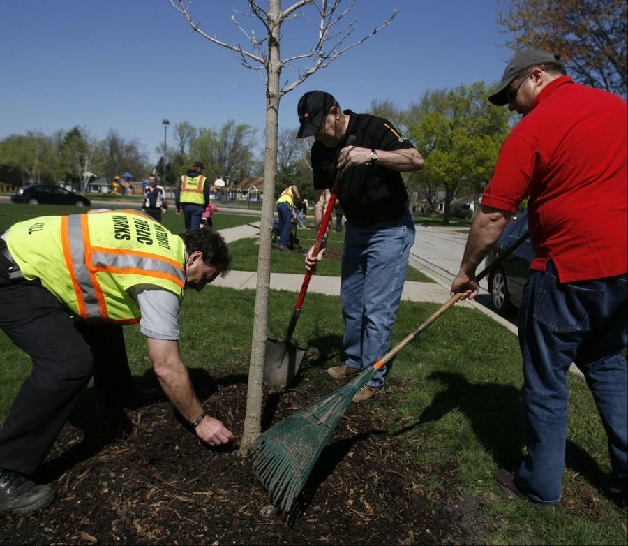Mount Prospect resident Terry Franzen, center, and fellow employees from HSBC Bank in Mettawa including Ray Johnson of Oak Park, right, spread mulch as Bill Kroll, Mount Prospect forest foreman, checks the proximity to the tree Wednesday.