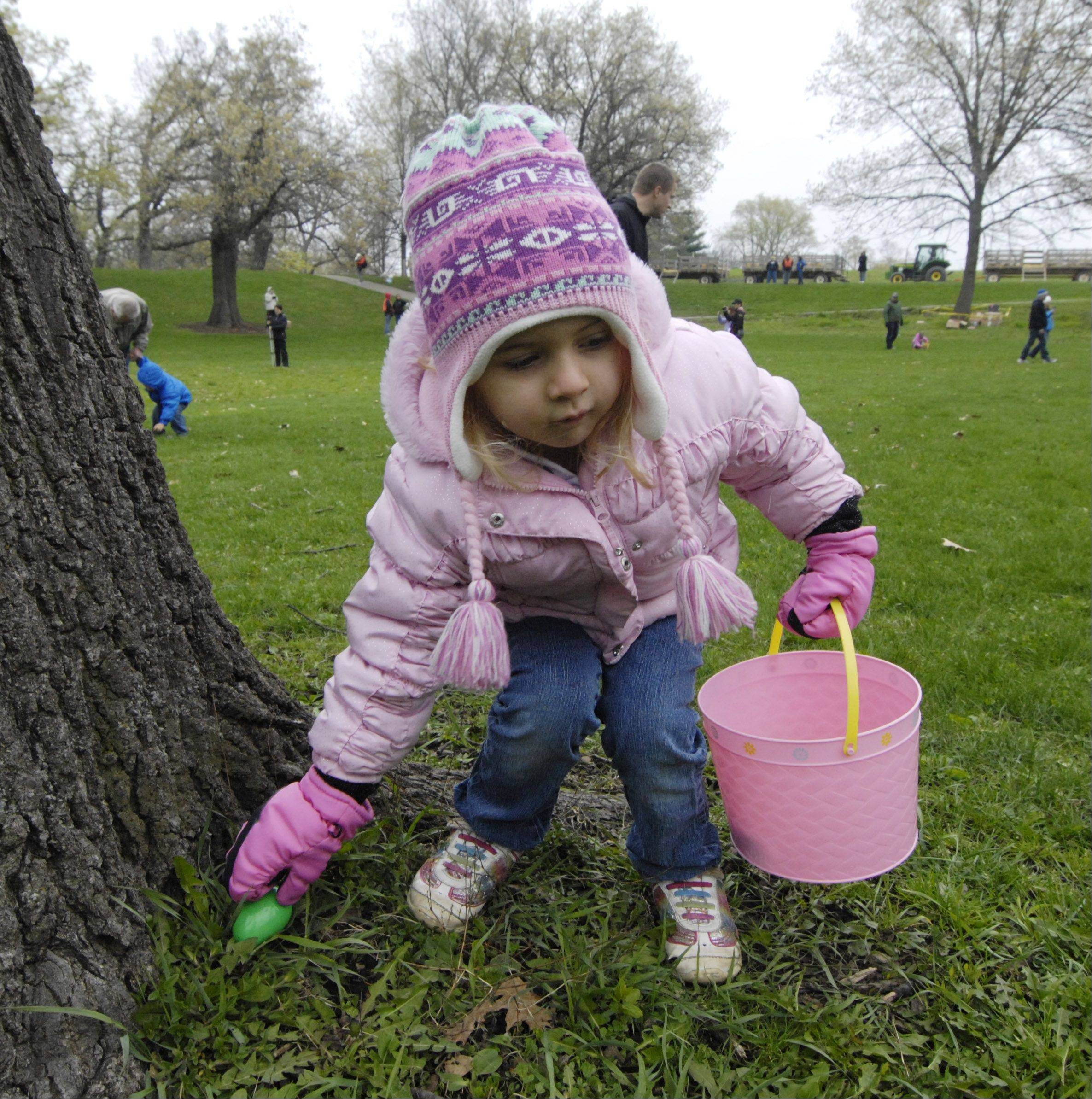 Addison Kenefick, 4, of West Dundee picks up a plastic Easter egg at the base of a tree during Saturday's hunt at Randall Oaks Park in West Dundee.