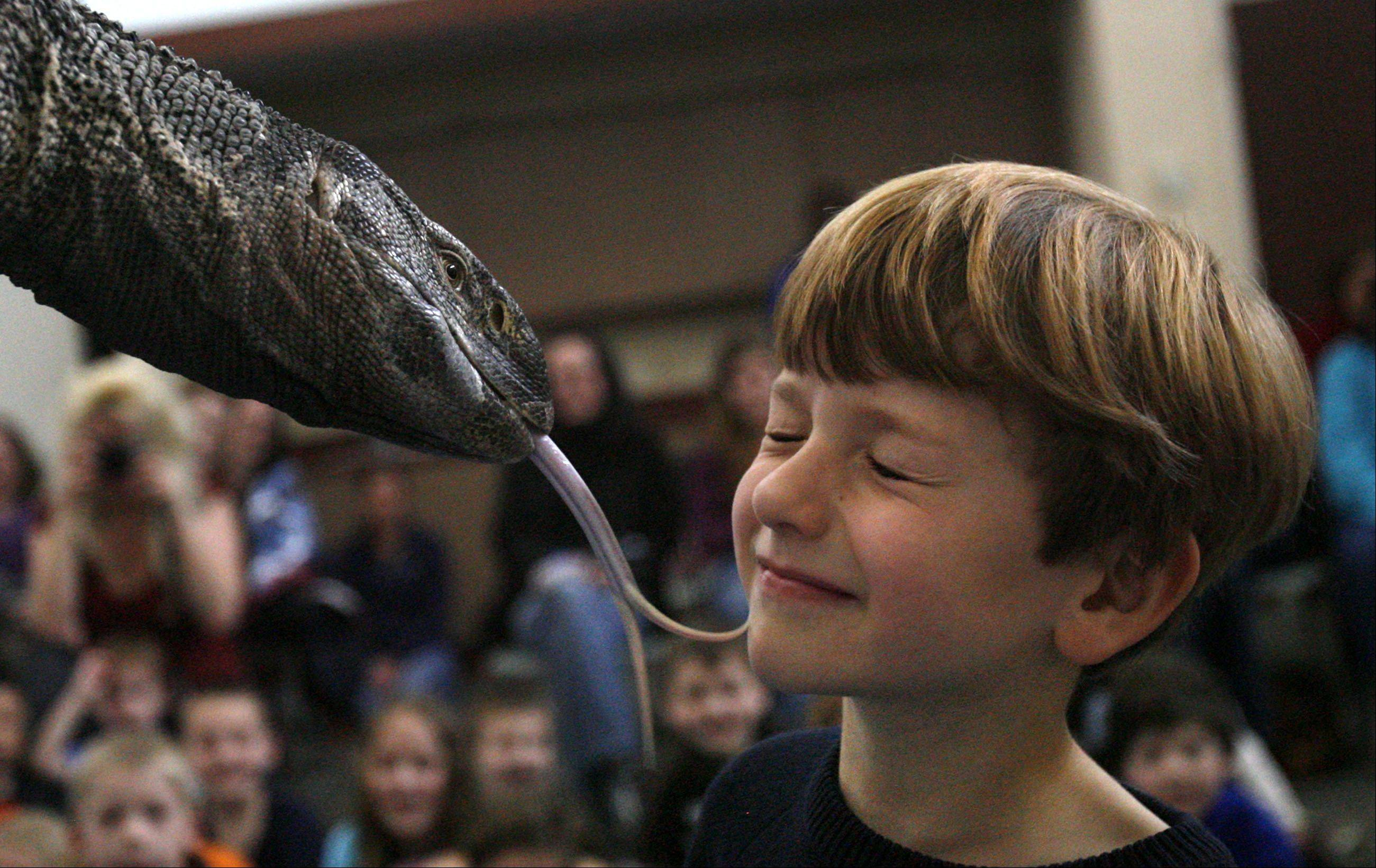 Dustin Russell, 5 of Lindenhurst, gets licked by a black throat monitor lizard being held by Jim Galeno, reptile manager with Dave DiNaso's Traveling World of Reptiles during a program at Lake Villa District Library on Friday, March 30th.
