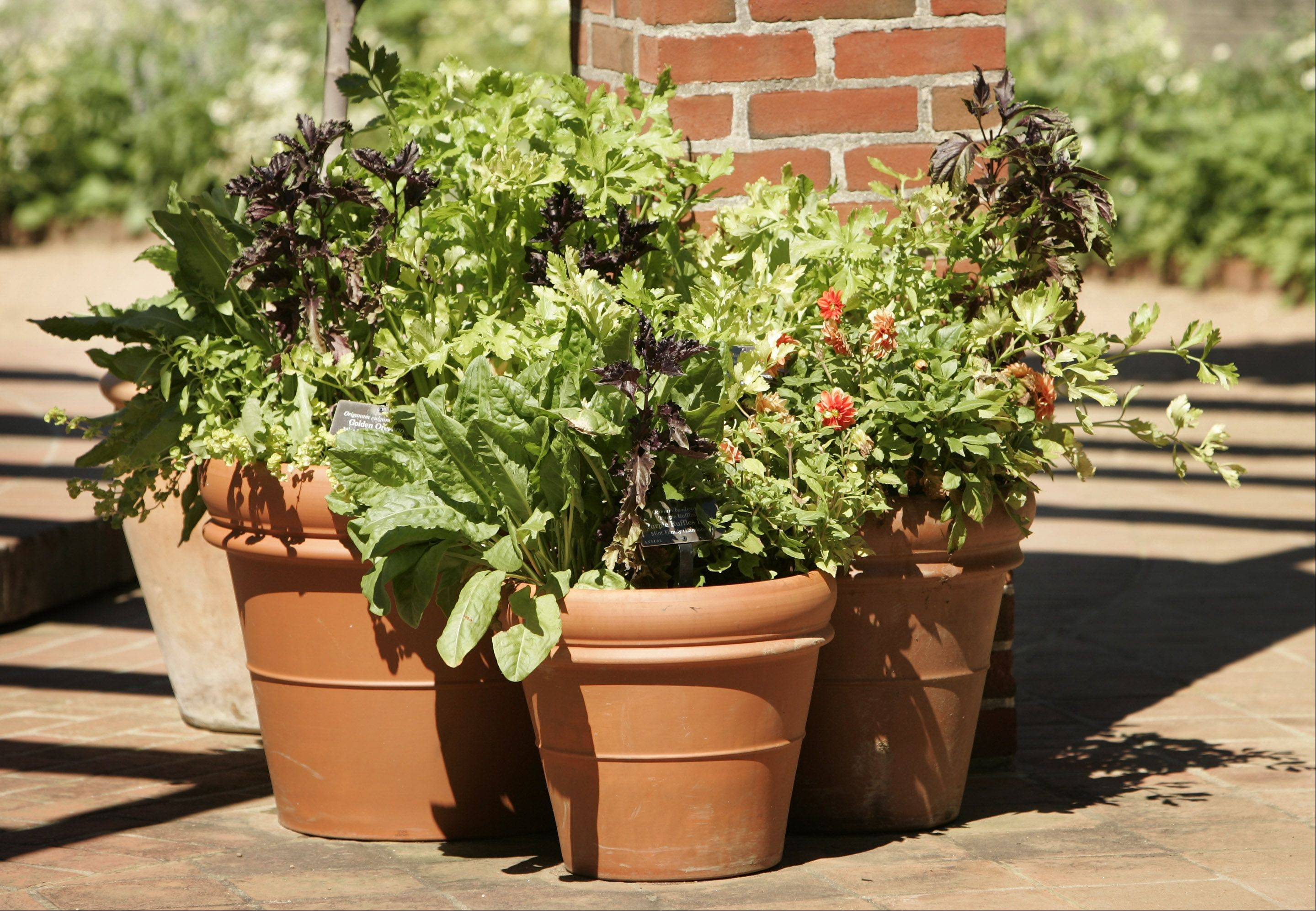 "The Geneva Park District, in cooperation with Heinz Brothers Greenhouse in St. Charles, will offer a variety of gardening classes this spring, such as ""Container Planting"" and ""Easy Veggie Gardening."""