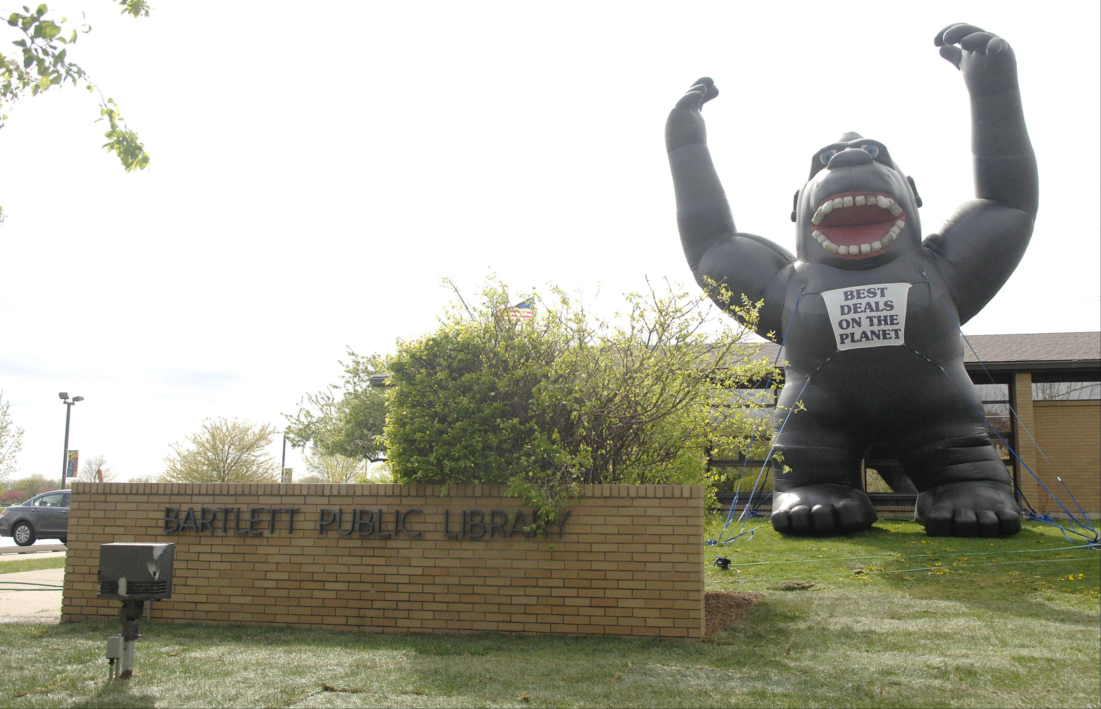 A giant inflatable gorilla greets drivers on Bartlett Road in front of the Bartlett Public Library. The library is celebrating National Library Week by taking on the appearance of a car dealership to bring in patrons. Signs, window paintings and flags adorn the exterior and prizes await inside.