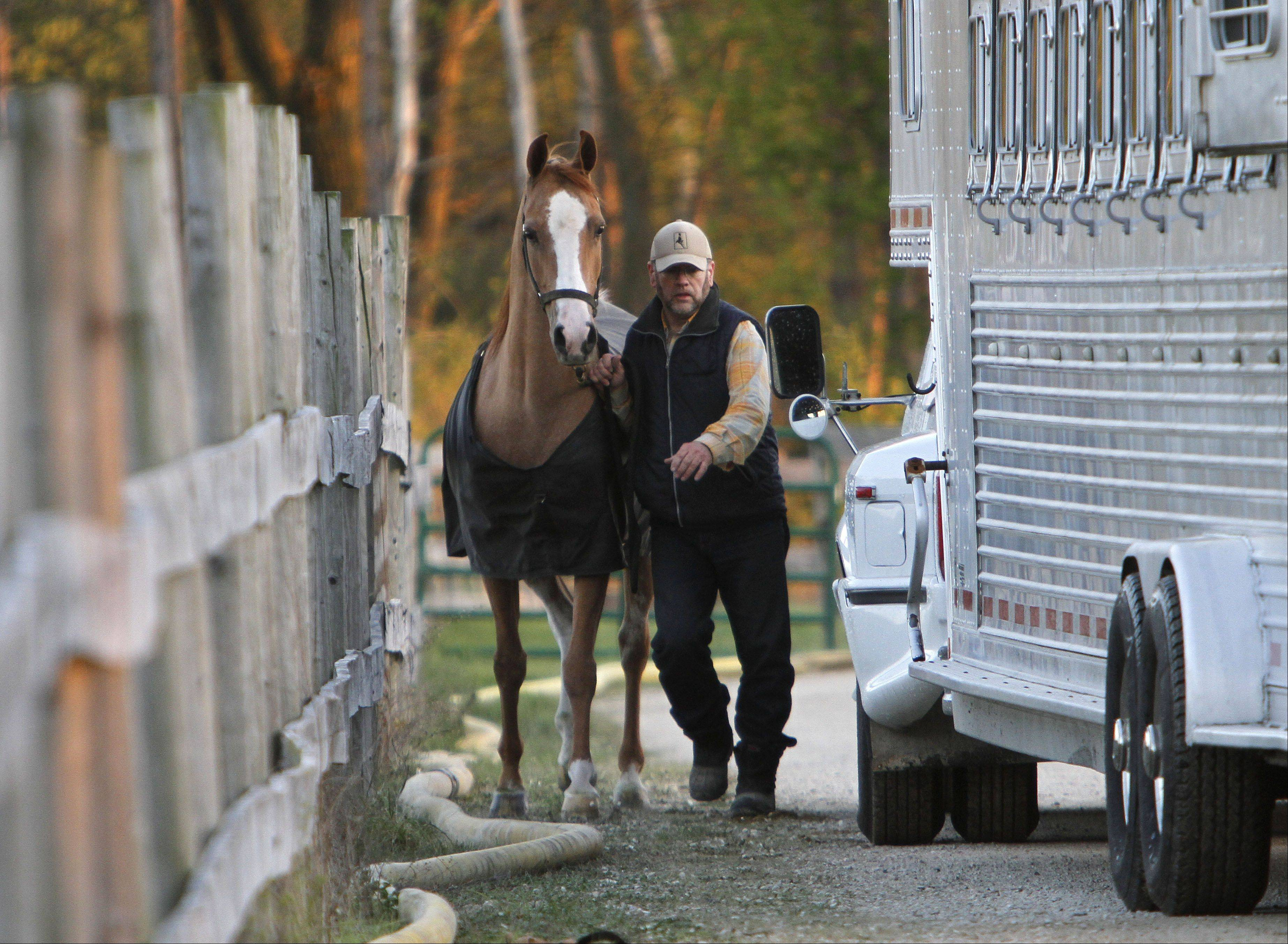 A horse owner scrambles to get his horse out of Black Tie Stable in McHenry after a fire destroyed the facility Wednesday evening.
