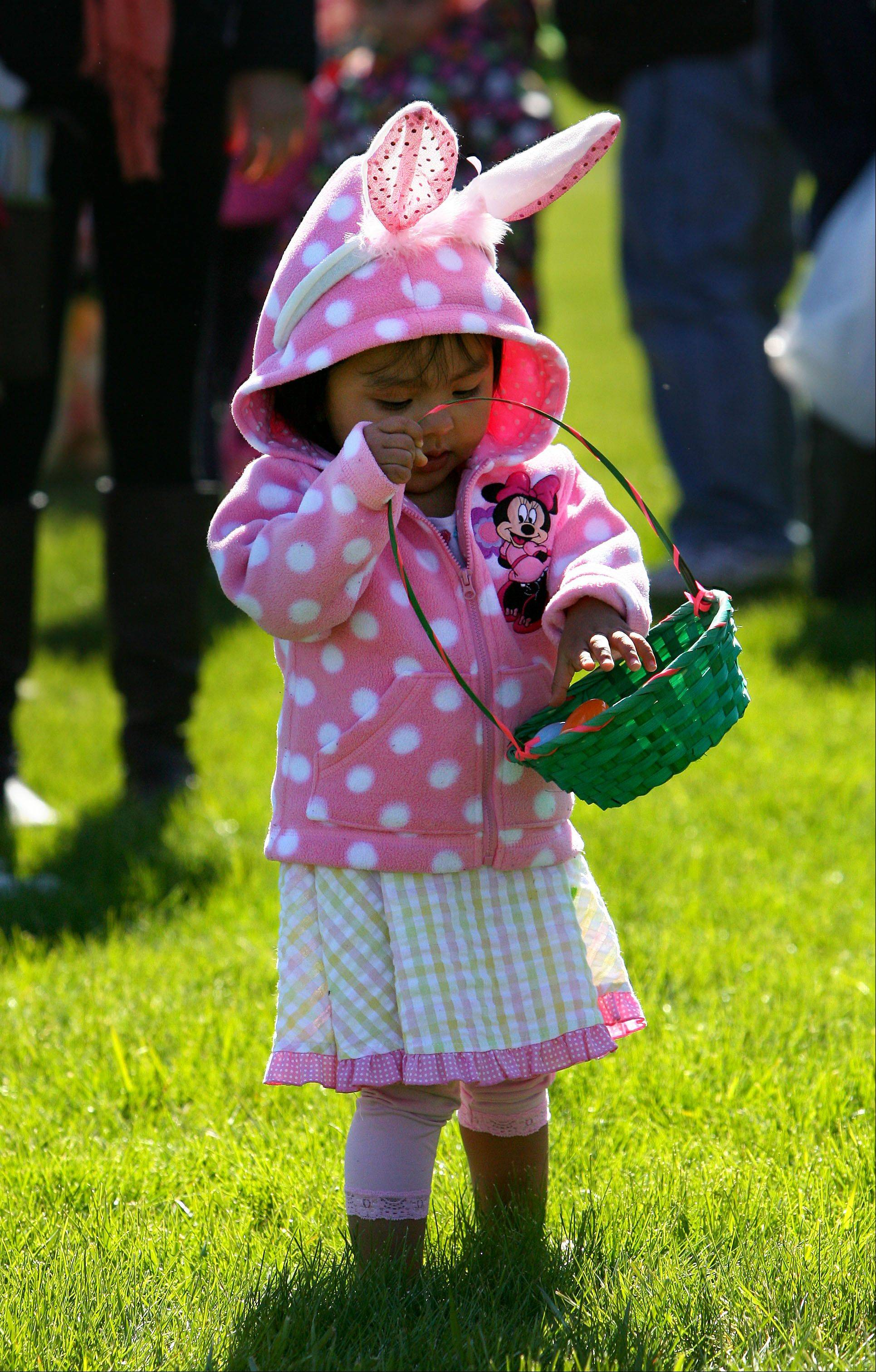 1-year-old Johanna Salgado puts eggs in her basket as she participates in an easter egg hunt at Keith Mione Community Park in Mundelein Friday Morning.