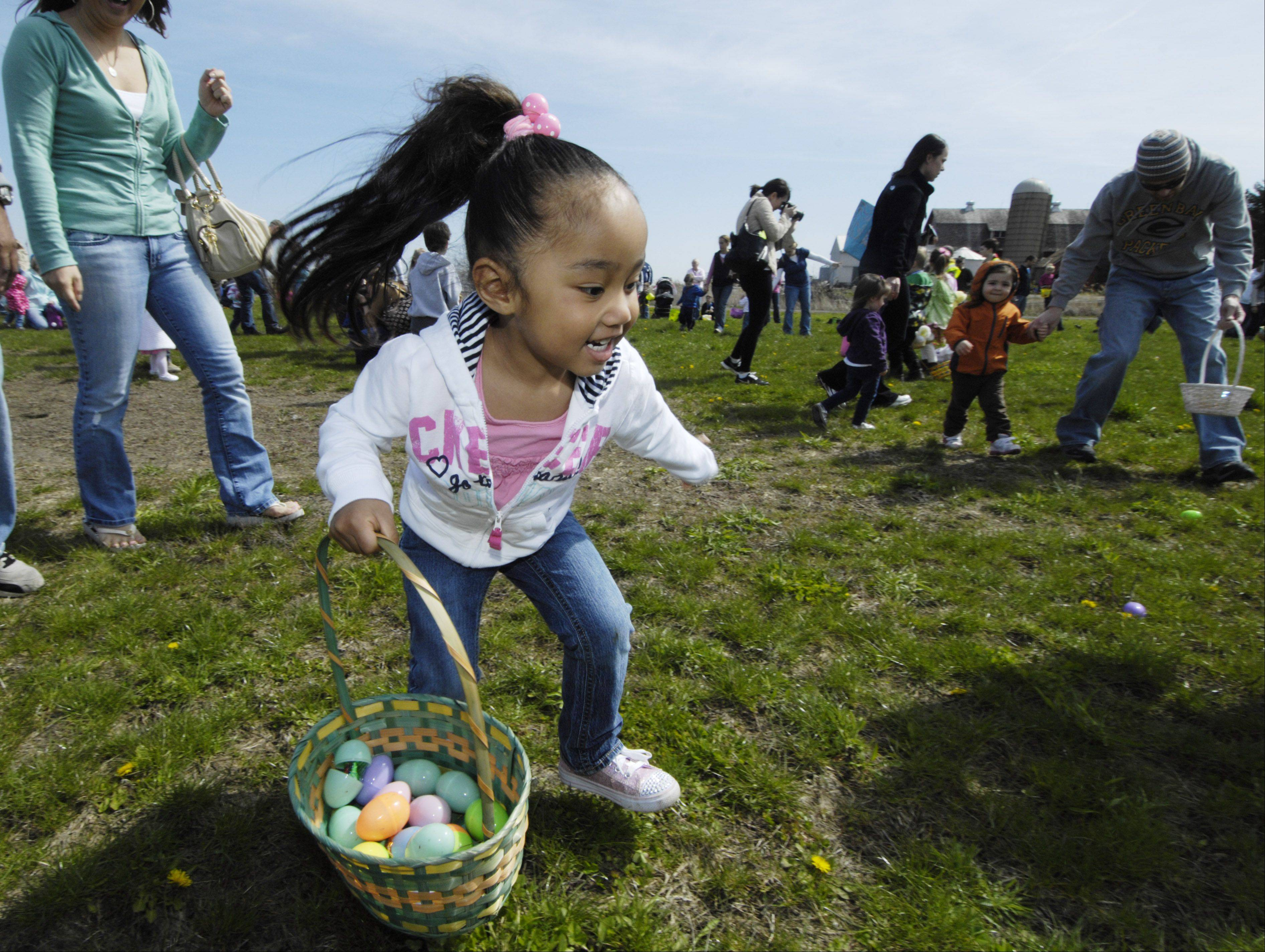 Aika Elzey, 3, of Round Lake gathers eggs during Saturday's Easter egg hunt at the Lake County Fairgrounds in Grayslake.
