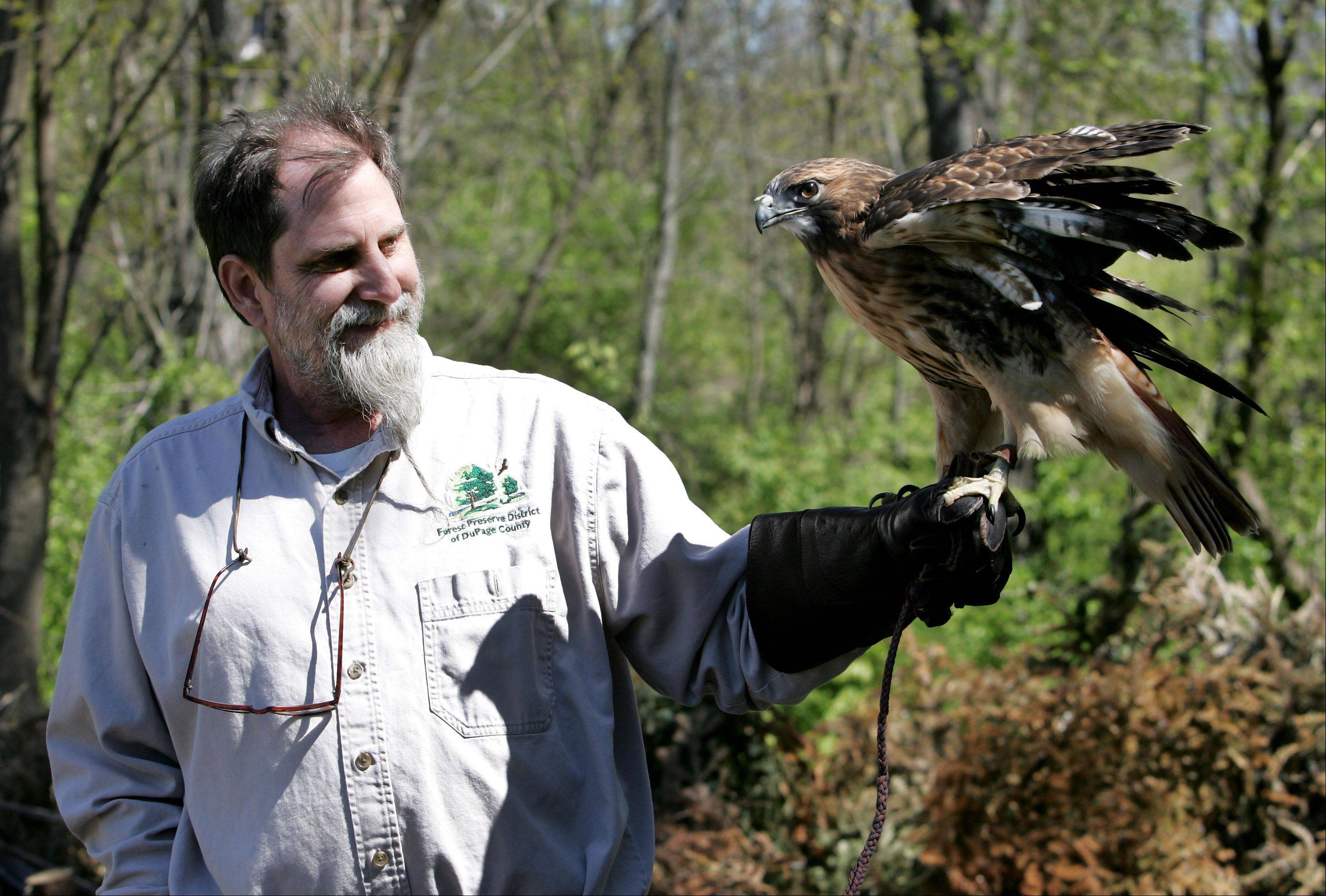 Jack MacRae, naturalist at Willowbrook Wildlife Center in Glen Ellyn, holds Henna, a red-tailed hawk and permanent resident at the center. MacRae works to train the animals used in educational programs, interacts with visitors and studies patterns in nature for the post he has held at Willowbrook since 1996.