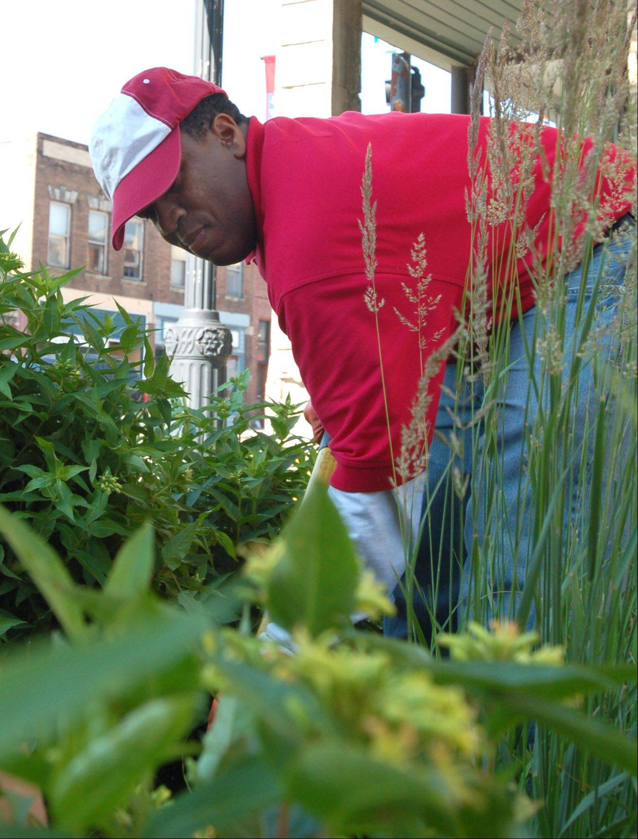 "John Woodhouse of West Dundee helps with planting at last year's ""Earth Day, Every Day"" project in downtown West Dundee."